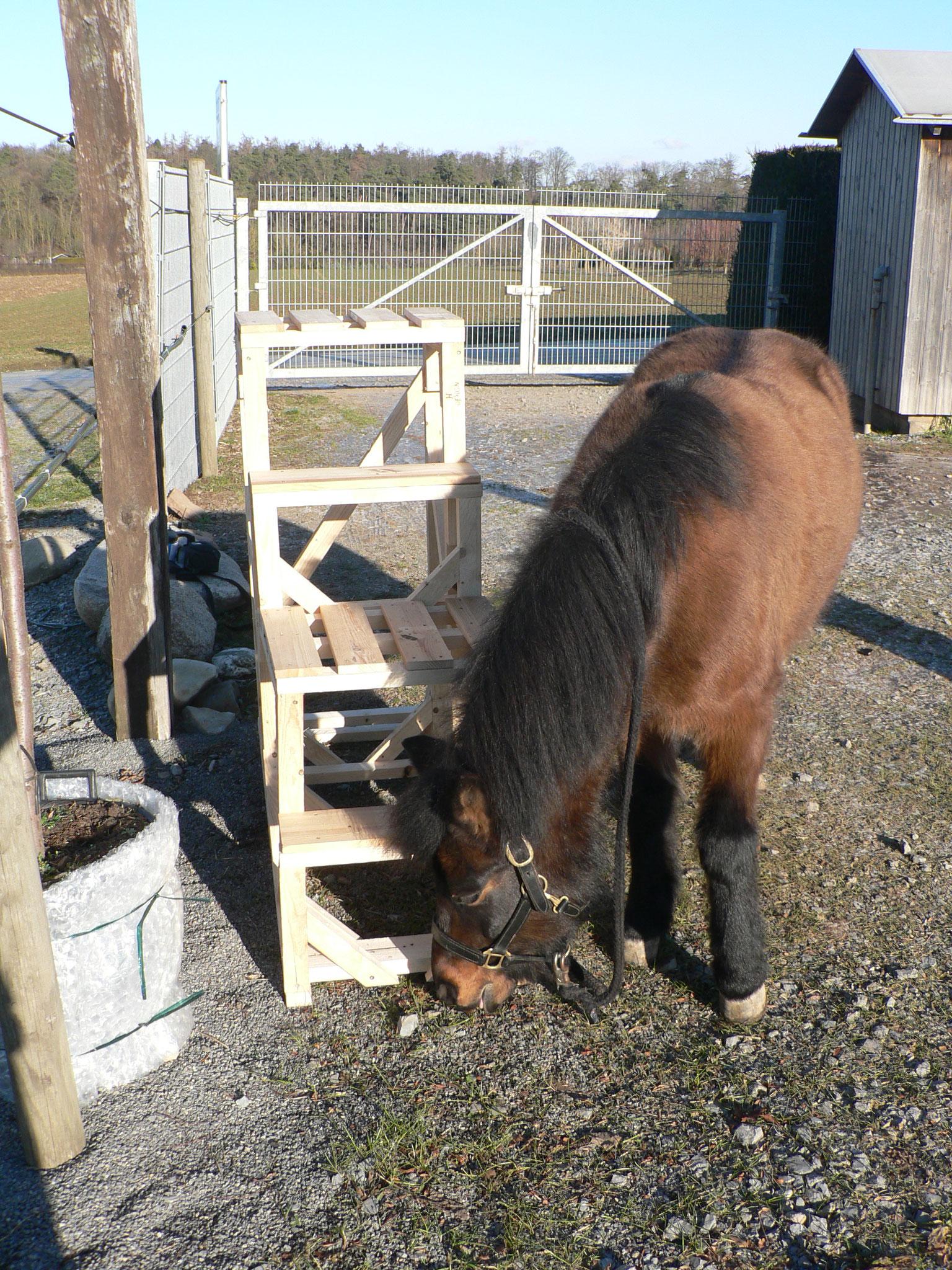 Aufsteighilfe für verschieden große Pferde