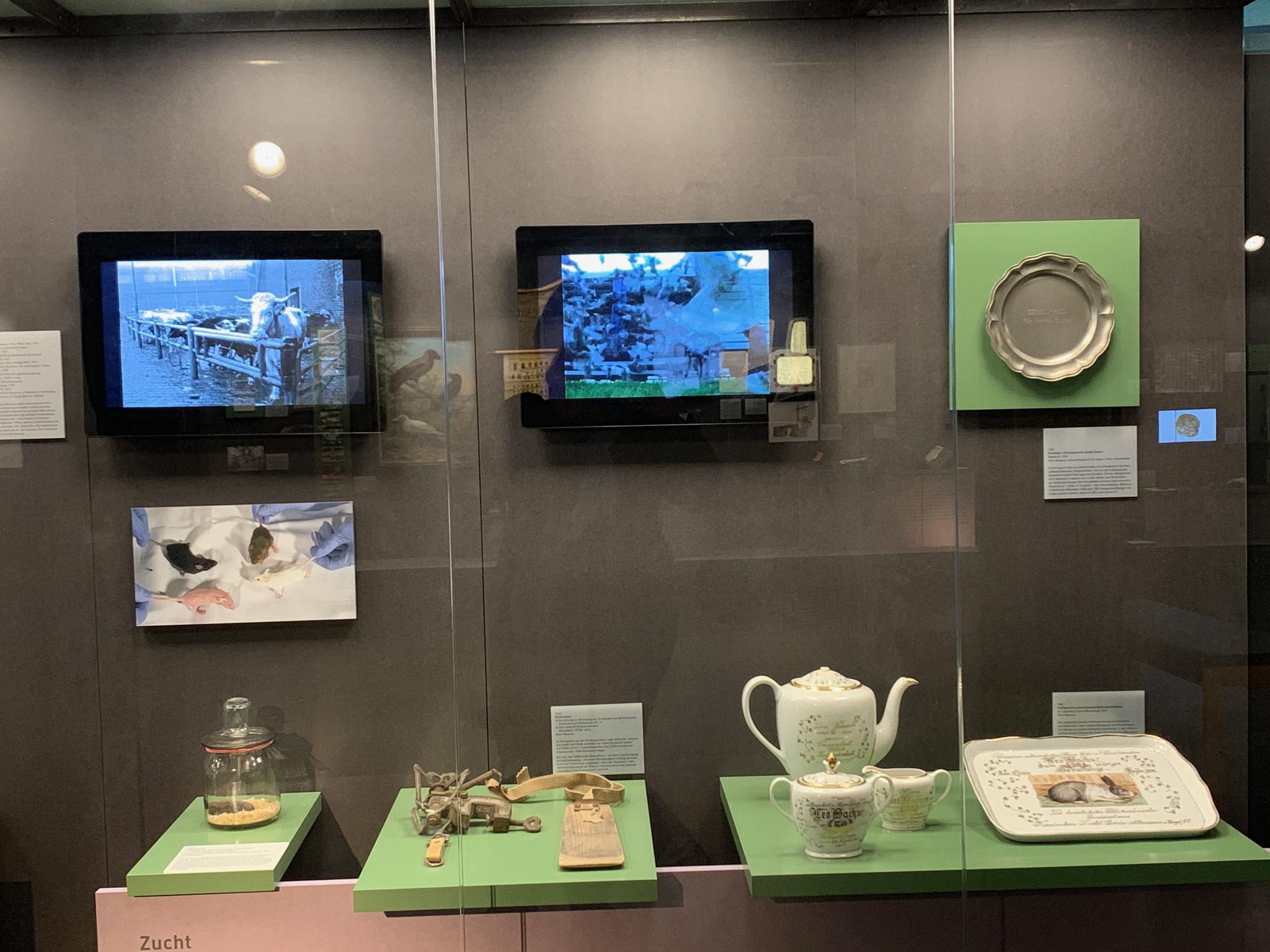 Der Fernseher in der Mitte des Bildes zeigt einen kurzen Film mit dem Auflass von Brieftauben.