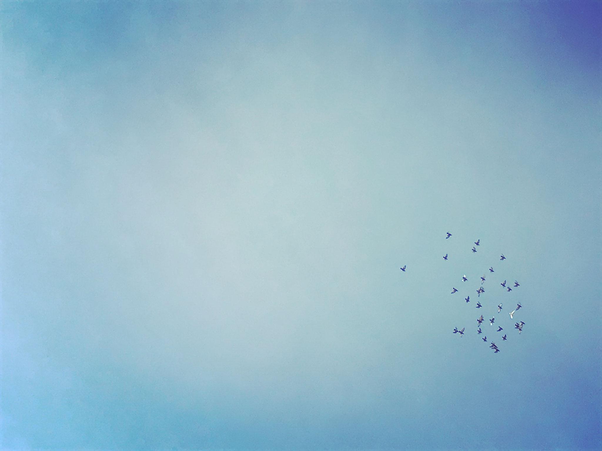 Die Brieftauben fliegen nach Hause...