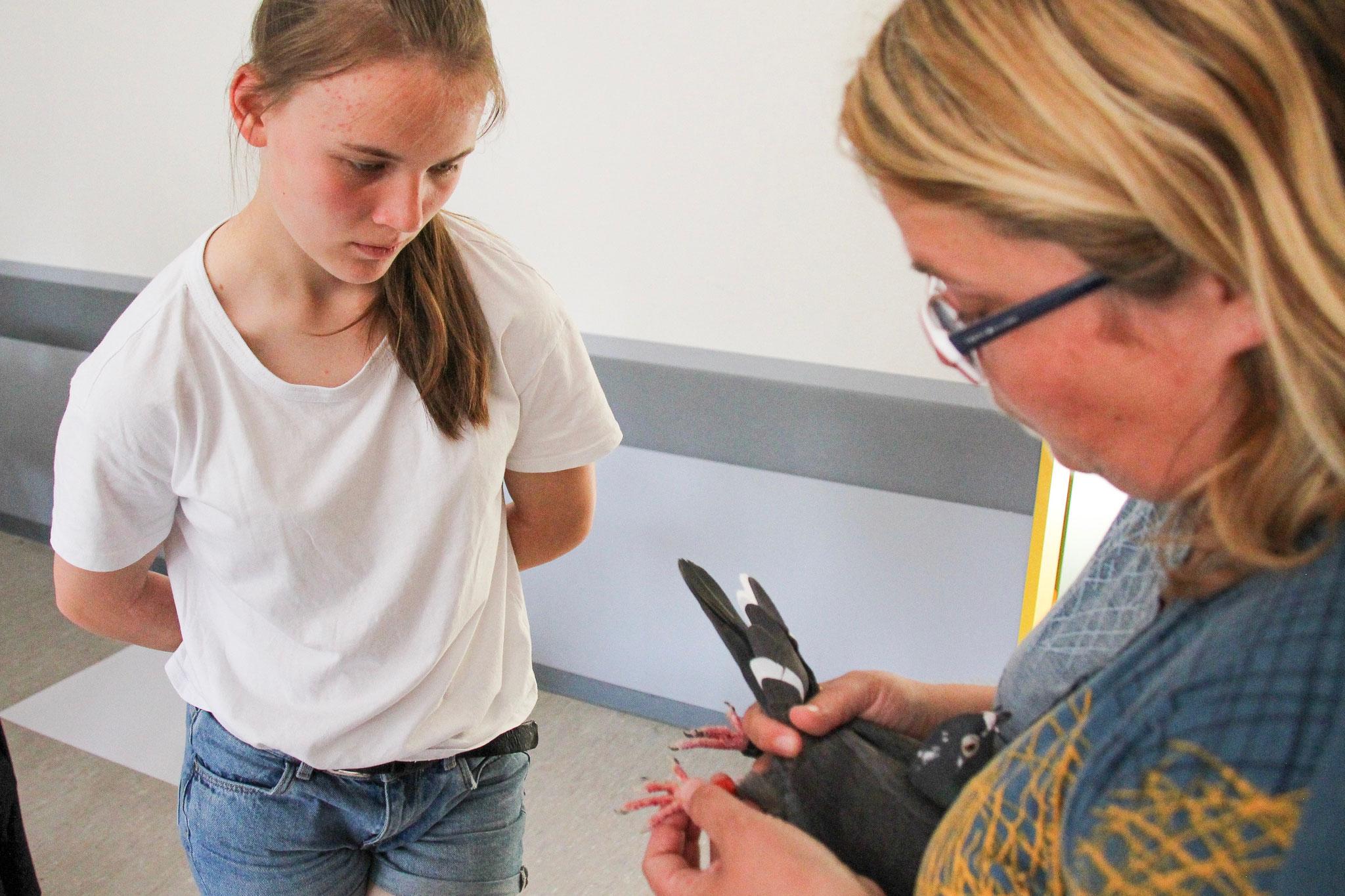 Interessiert erfragen die Schülerinnen und Schüler Details zu den Brieftauben