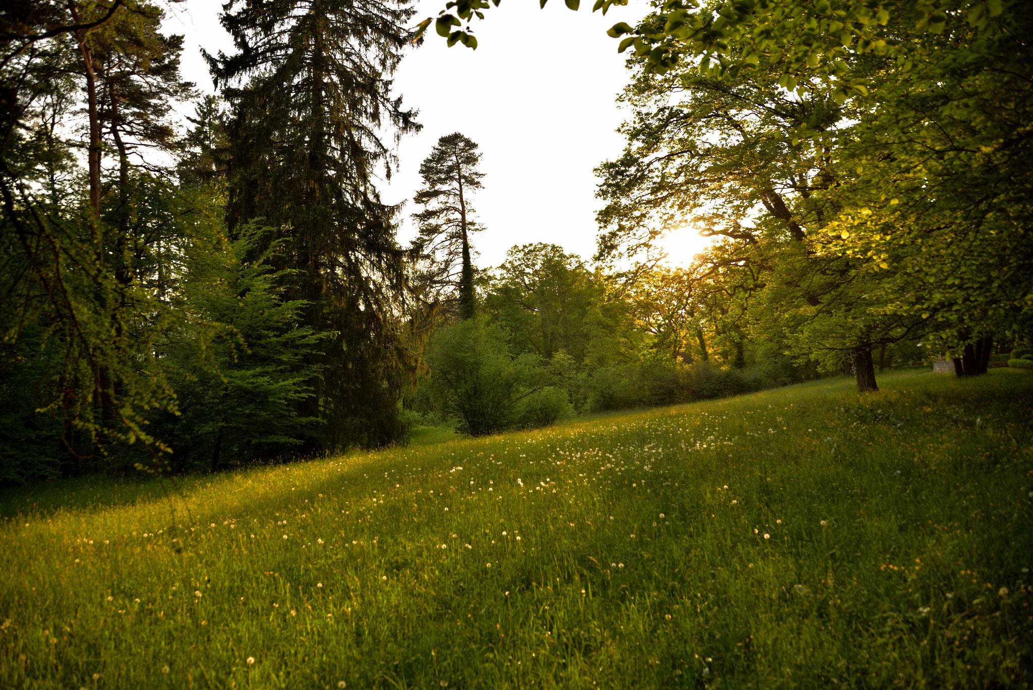 Im Seidlpark in Murnau