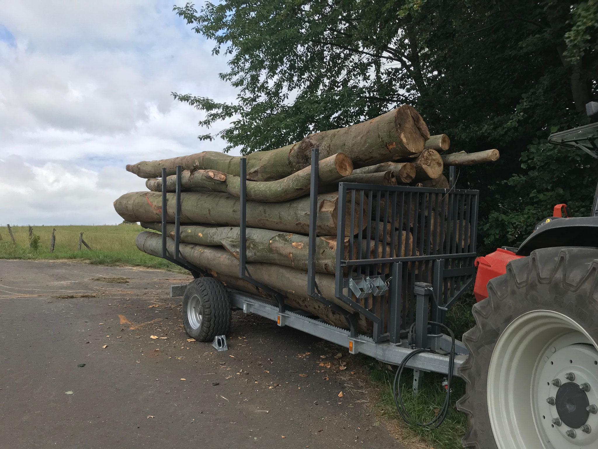 Transport der Stämme zum Holzplatz