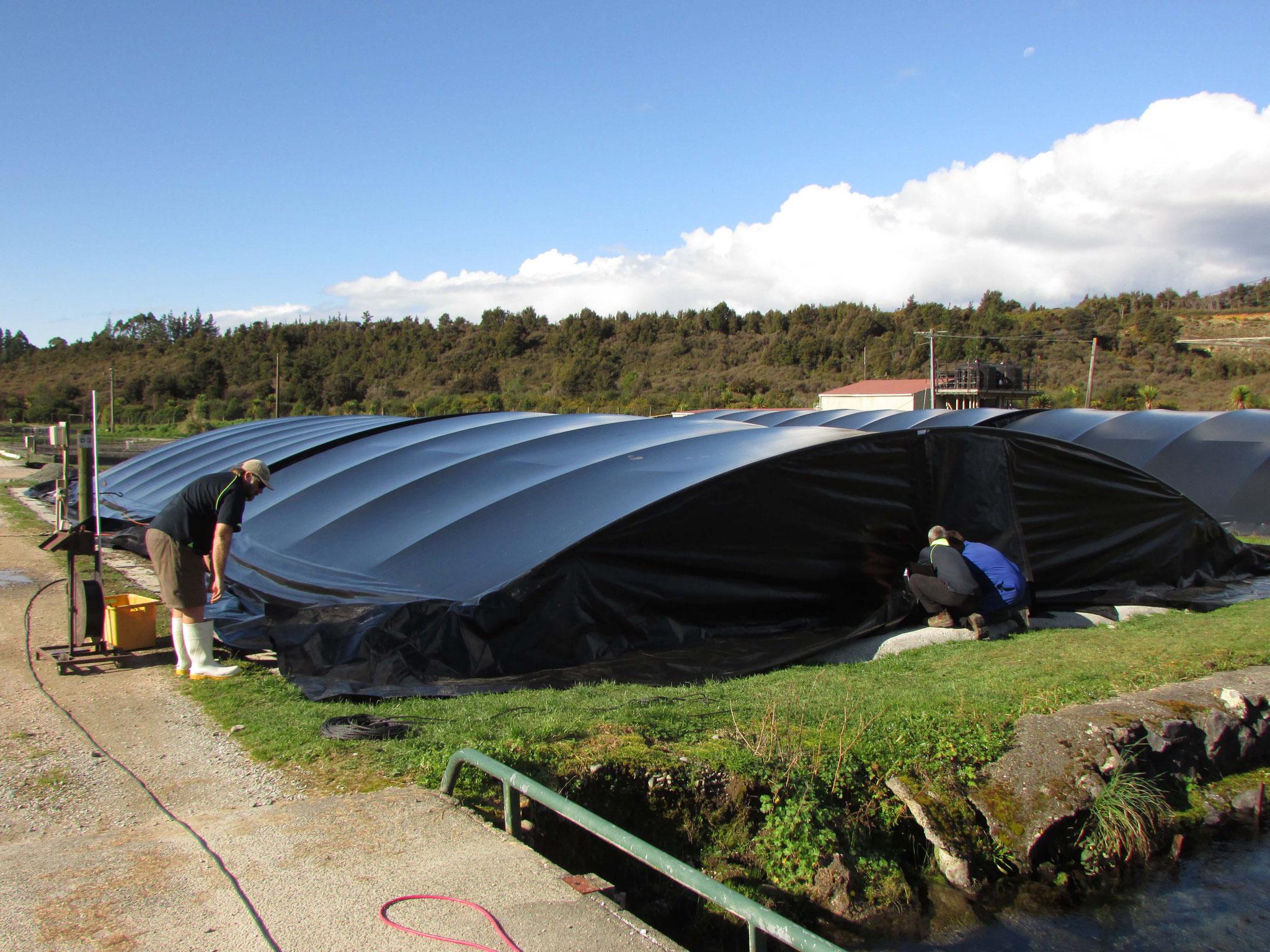 Fish Hatchery Covers, Takaka, New Zealand