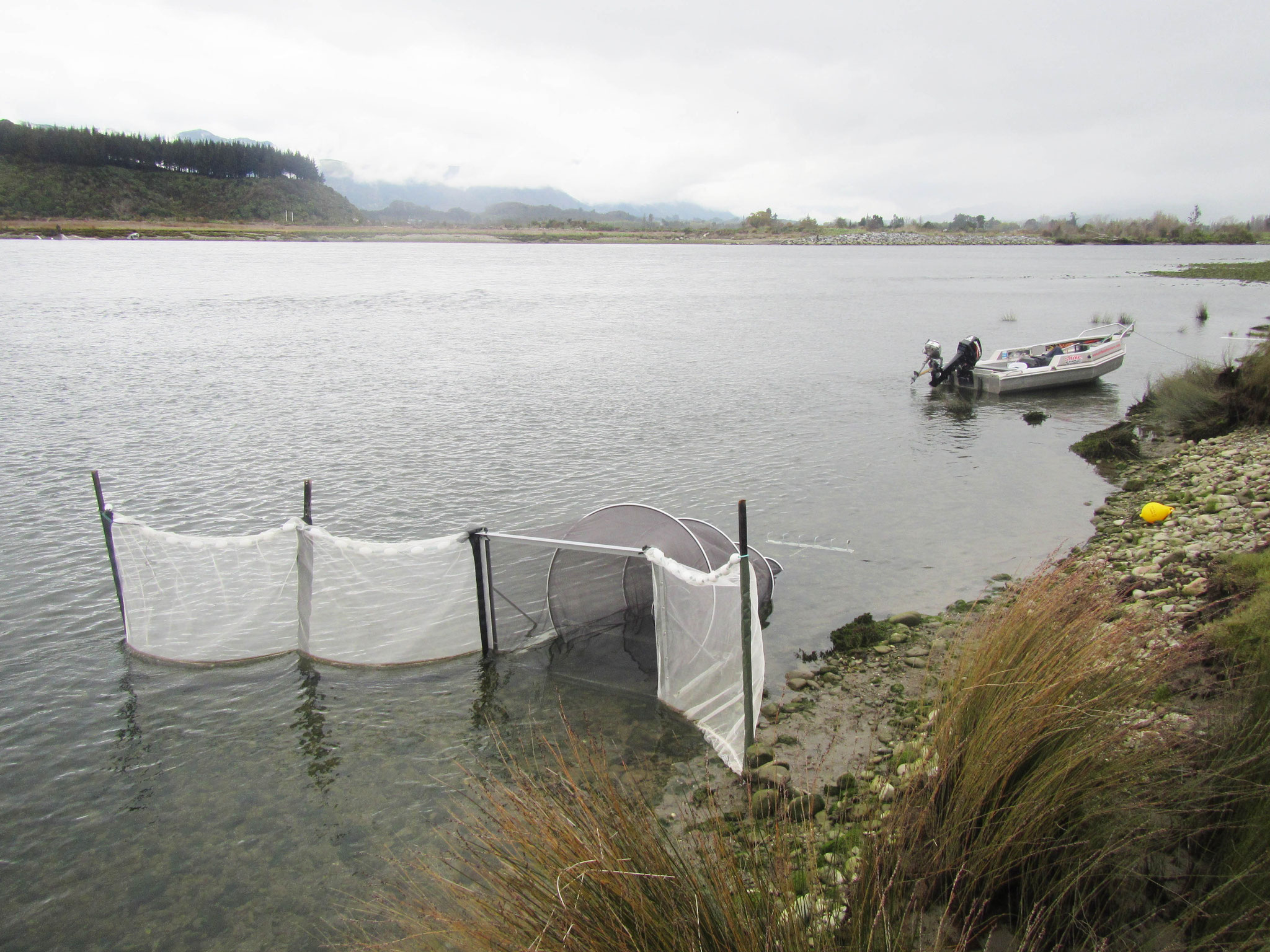 Whitebait Nets, New Zealand