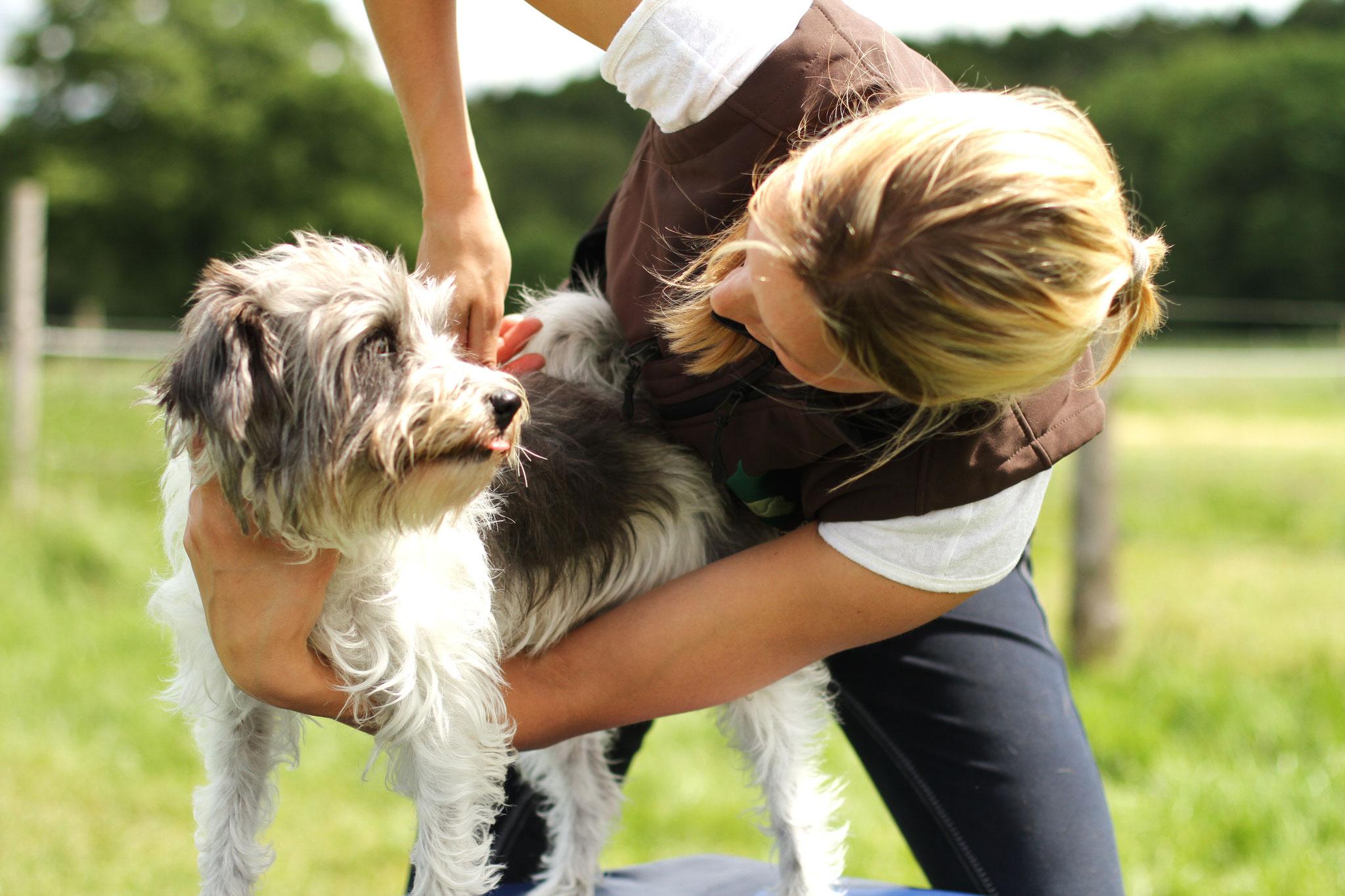 veterinärmedizinische Manualtherapie