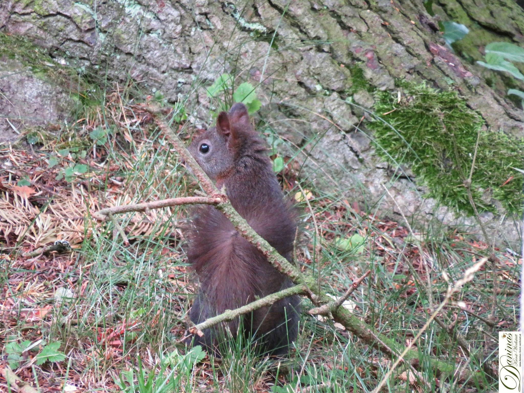 Eichhörnchen sucht unter Bäumen nach Zapfen