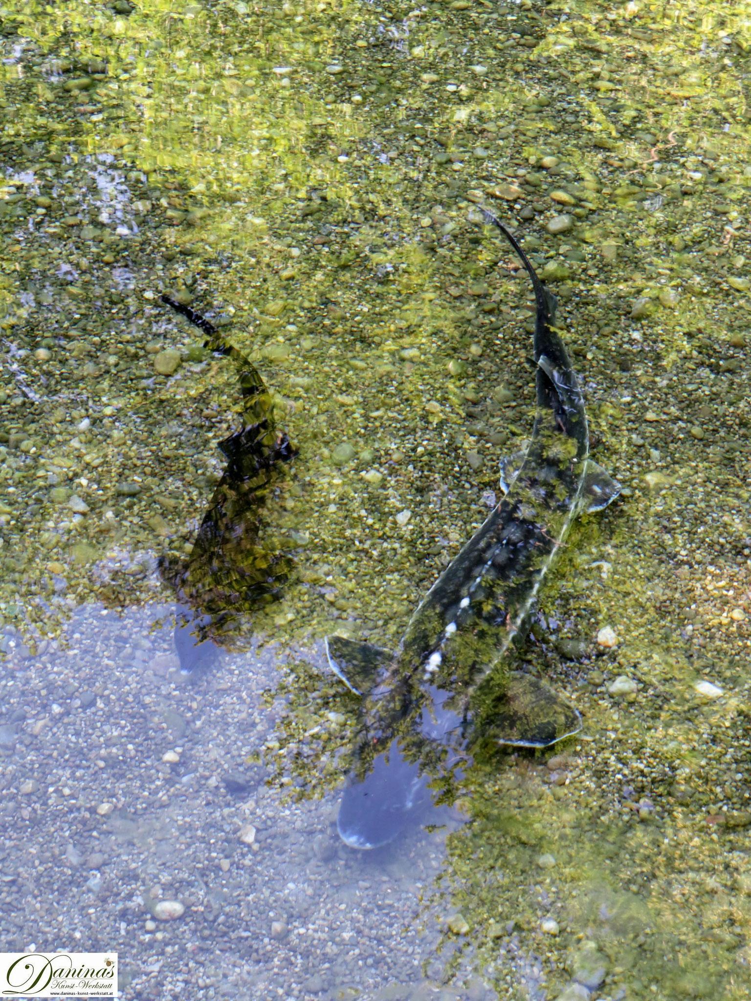 Fischweiher vor dem Theatrum - Hellbrunner Wasserspiele in Salzburg
