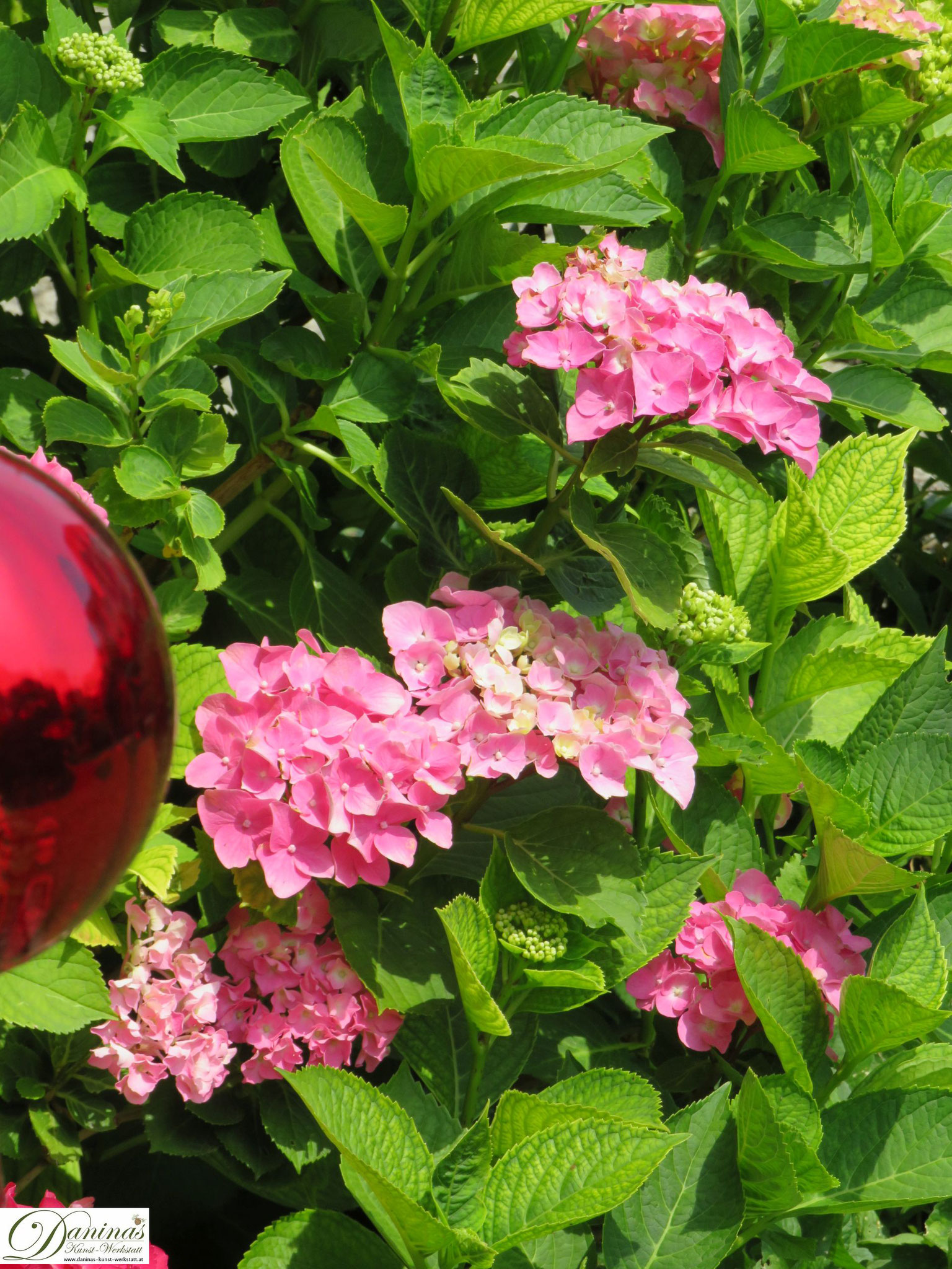 Romantischer Hortensien Garten Bilder by Daninas-Kunst-Werkstatt.at