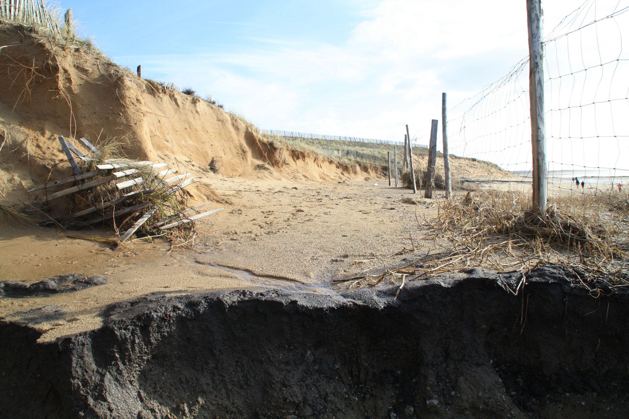 Recul de la dune de la Normandelière sur 6m et 250m de long