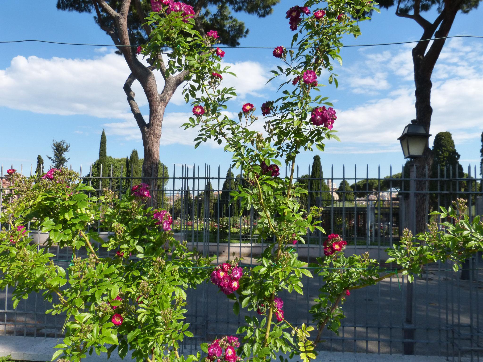 Die schattigen Bänke im Rosengarten laden zu einer Verschnaufpause ein.