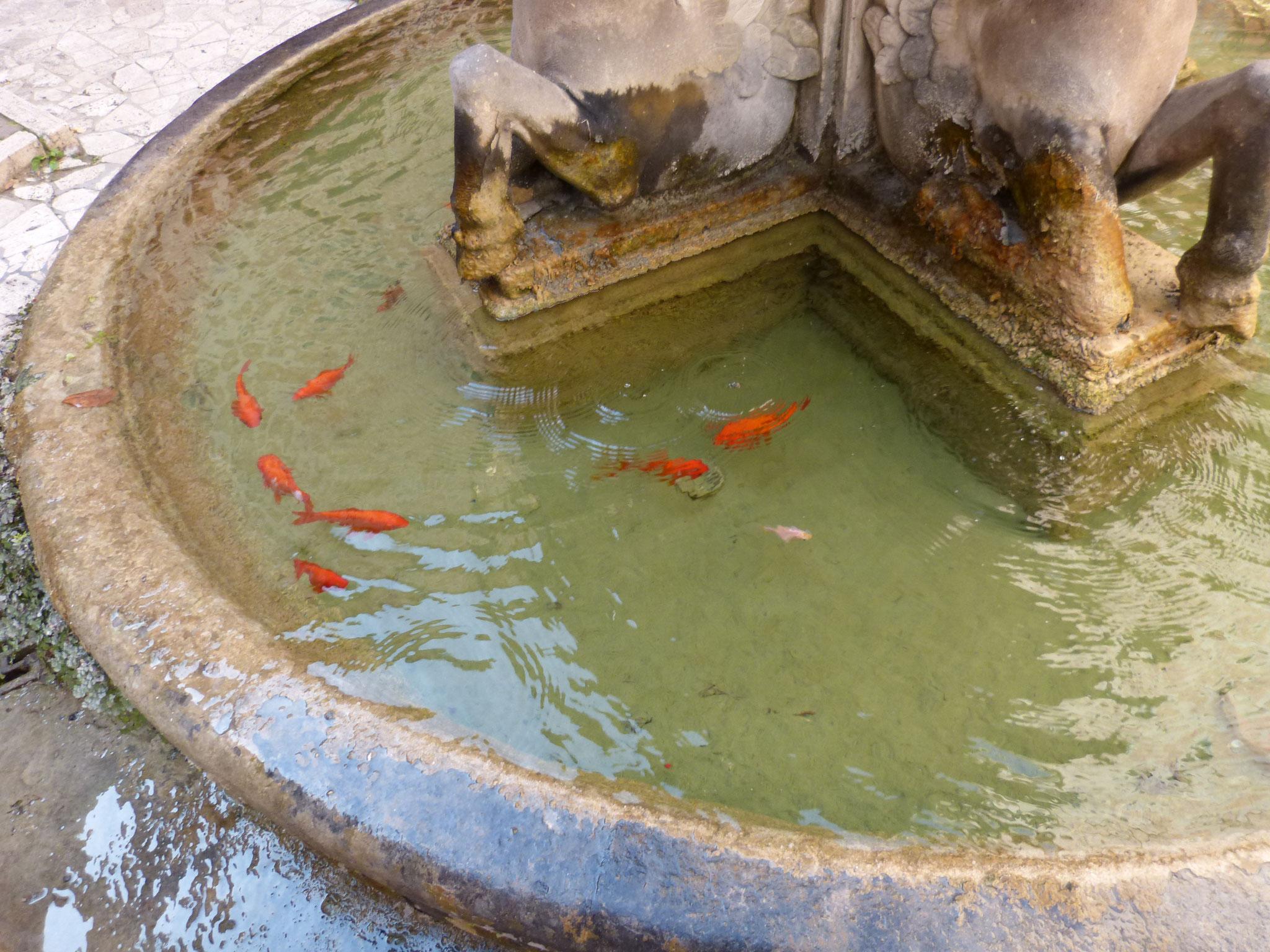 Manchmal sind römische Brunnen allerdings schon besetzt....