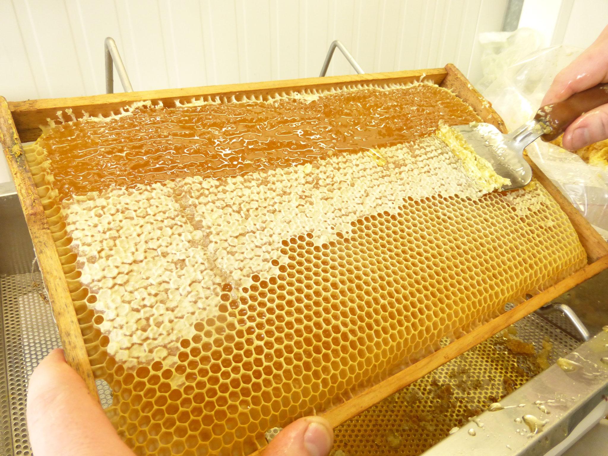 """Eine Wabe wird """"entdeckelt"""". Nach dem """"entdeckeln"""" kann der Honig aus der Wabe herausgeschleudert werden."""