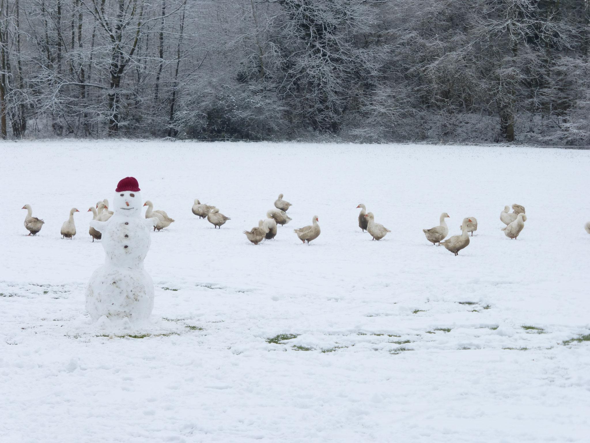 Gänseschar im Schnee