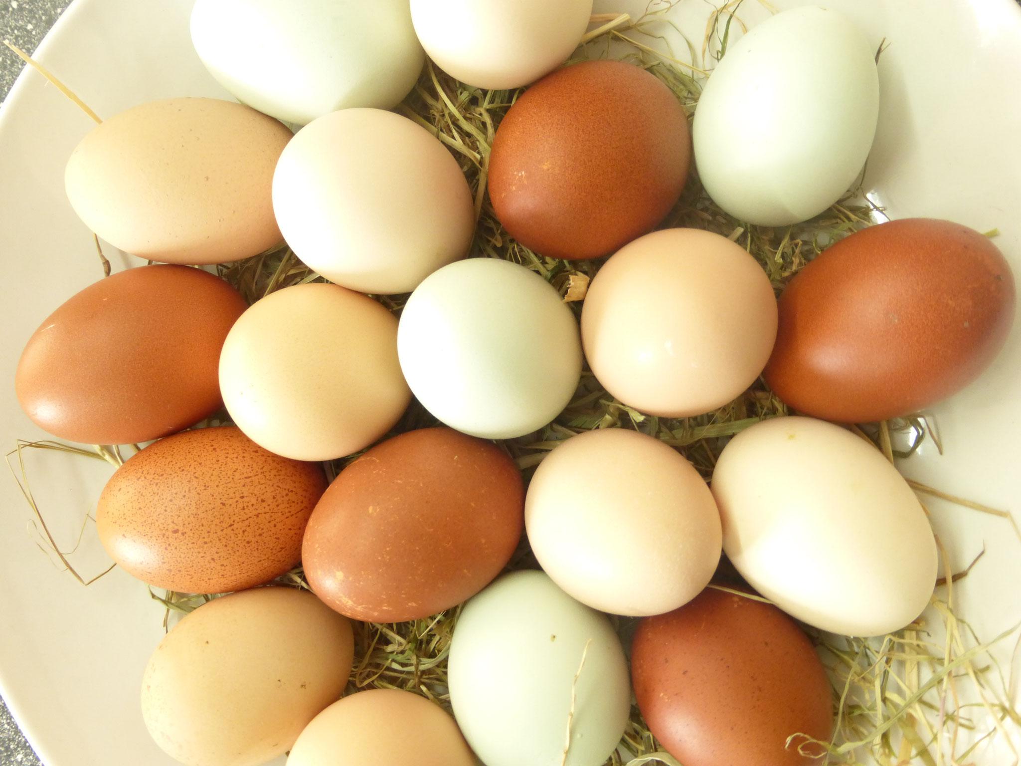 Unsere Eier sind unverwechselbar! Wir haben 6 verschiedene Hühnerrasse und somit Eier verschiedener Farbe !