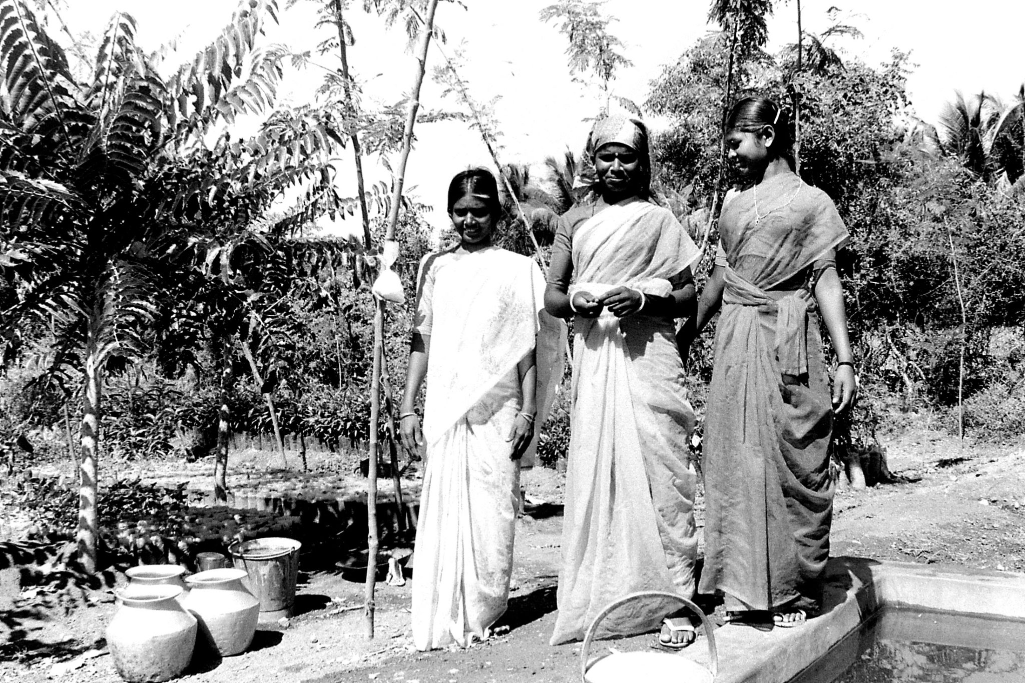 21/2/1990: 20: Batlagundi afforestation project