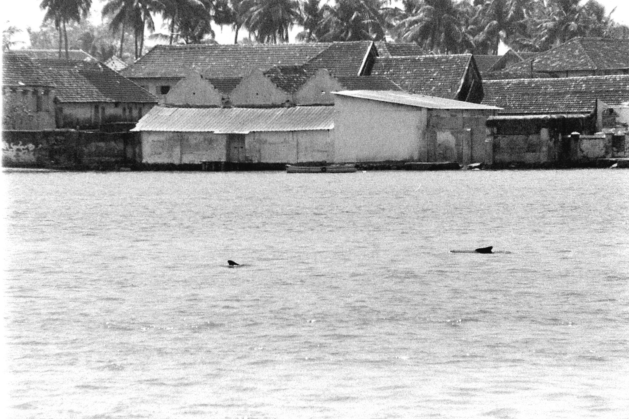 25/2/90: 0: Cochin dolphins and views of Fort Cochin