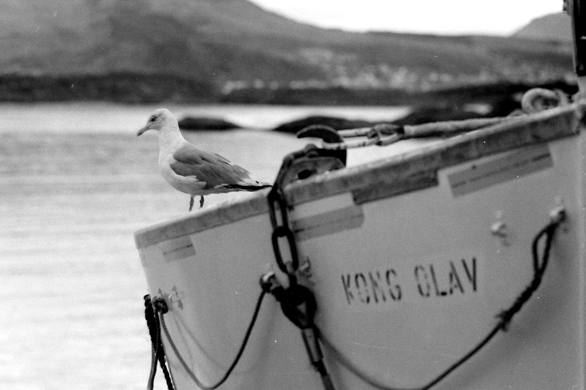 29: seagull