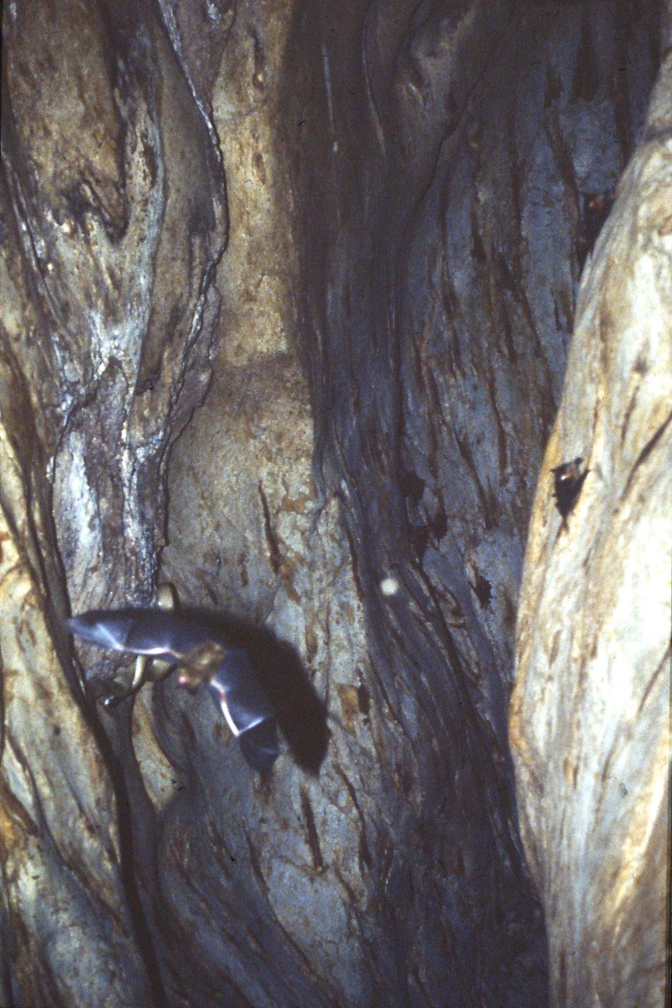 26/6/1990: 19: Tamen Negara bat cave