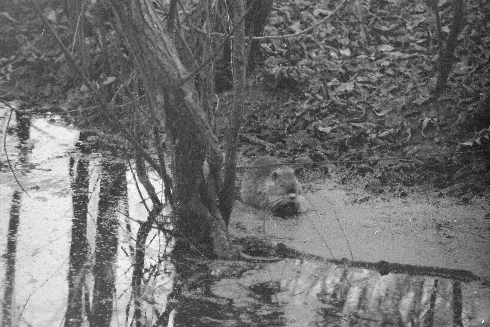 13/1/1991: 1: St Bernard Louisiana State Park