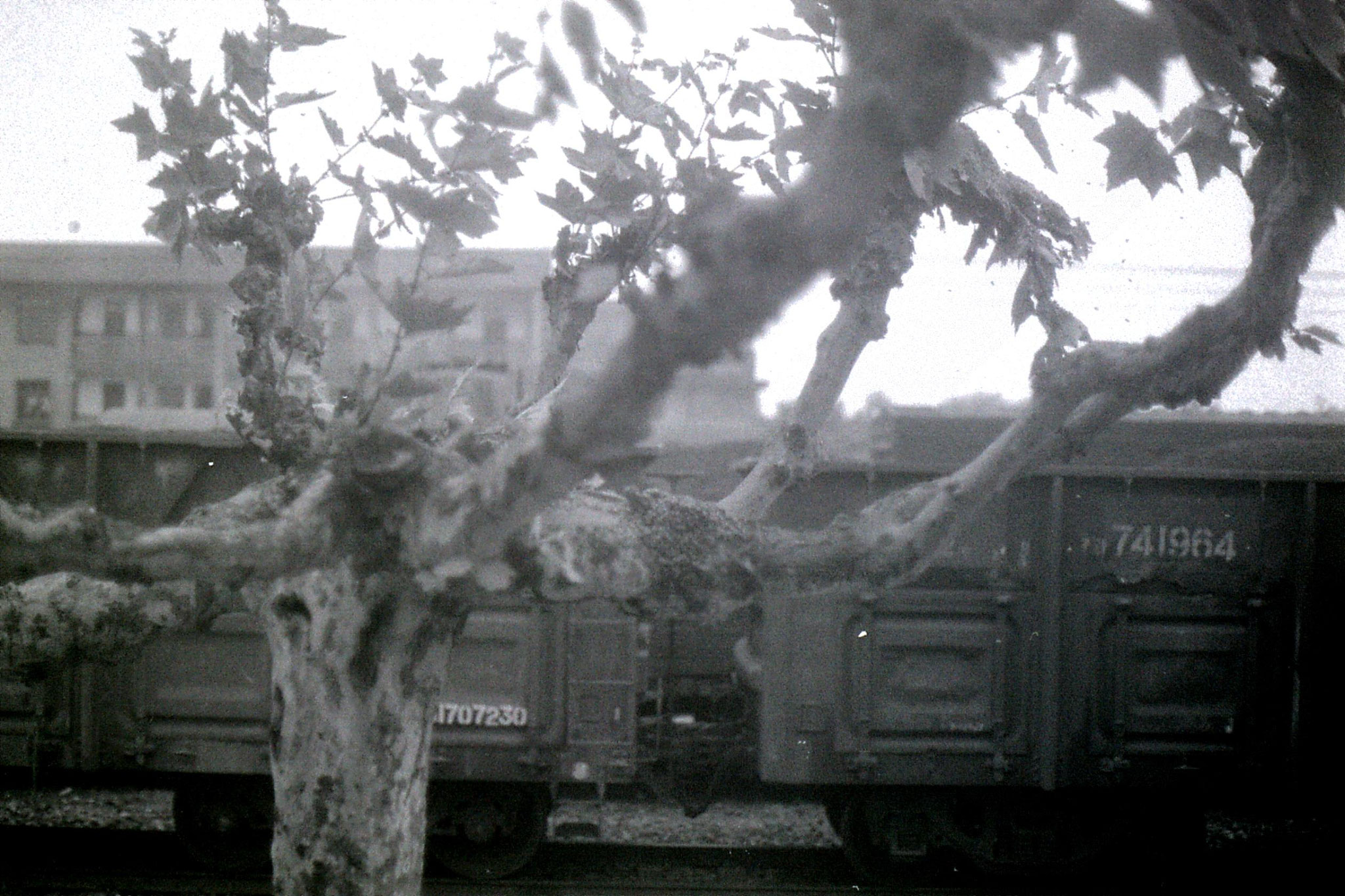 21/5/1989: 0: Quzhou bees in tree next to train