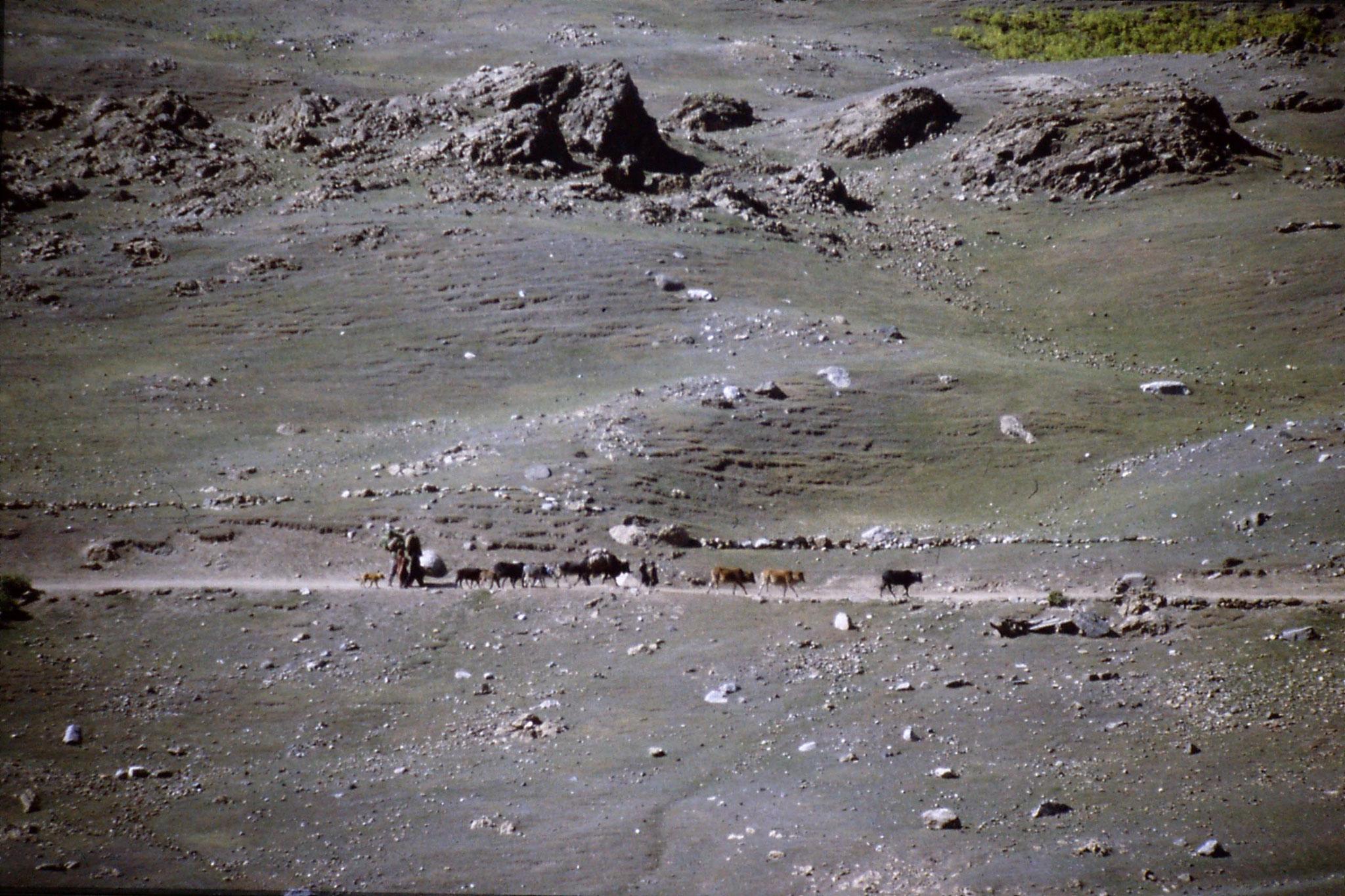 6/10/1989: 24: Burawai