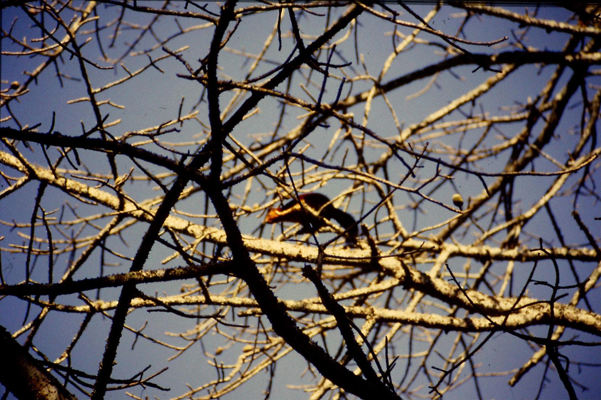 104/34: 22/2/1990 Periyar Giant squirrel