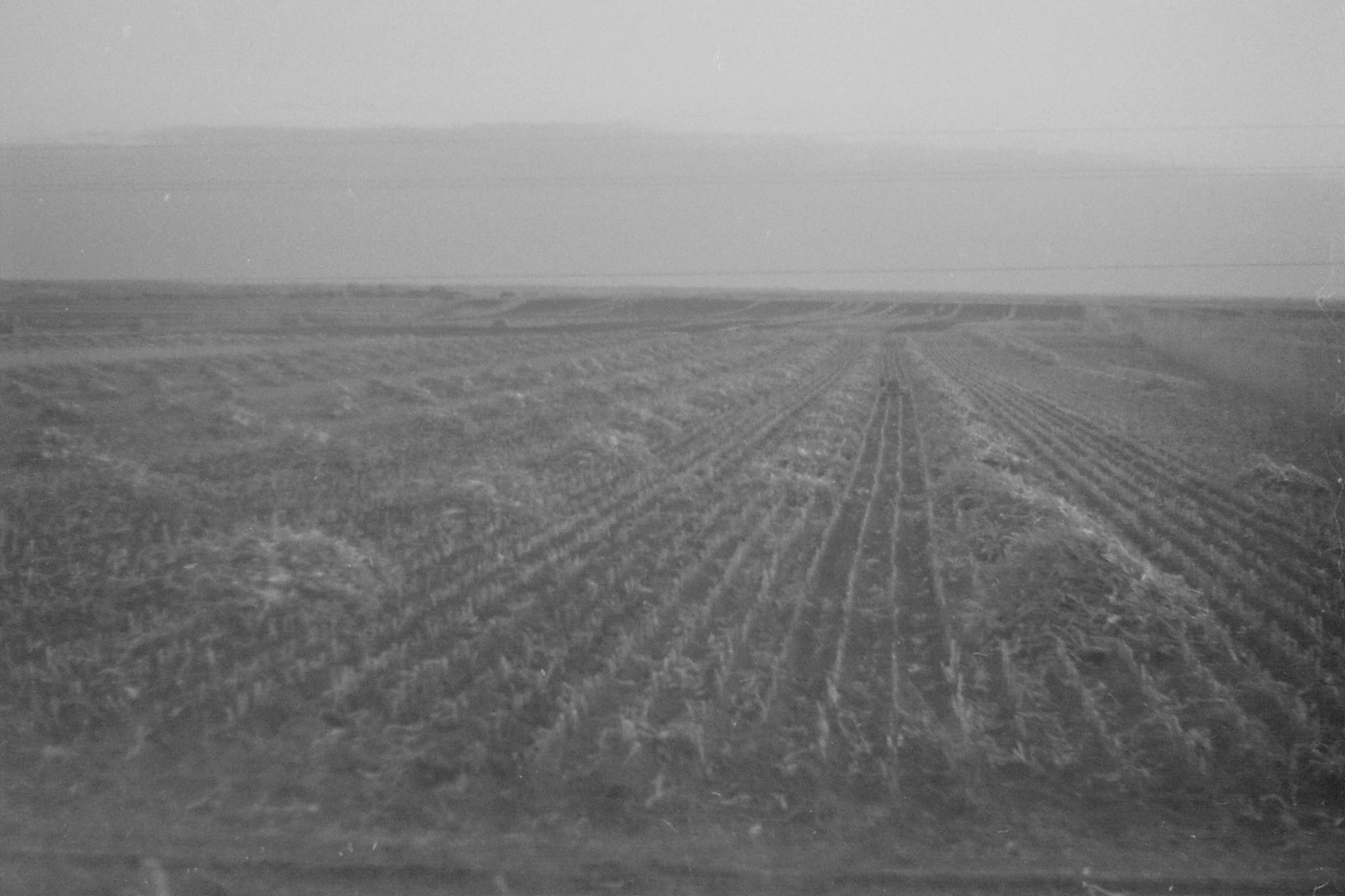 27/10/1988: 27: fields after Harbin