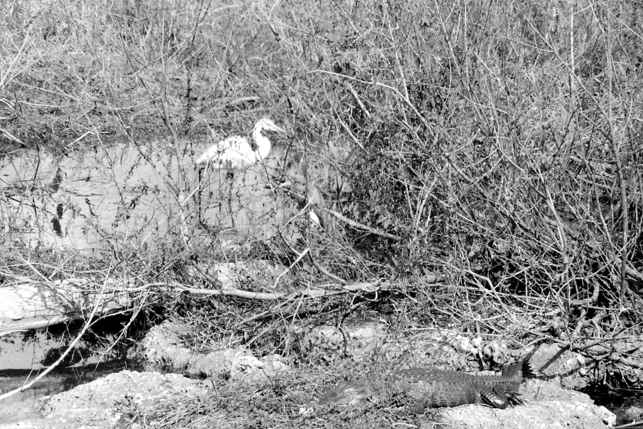 21/12/1990: 11: Everglades