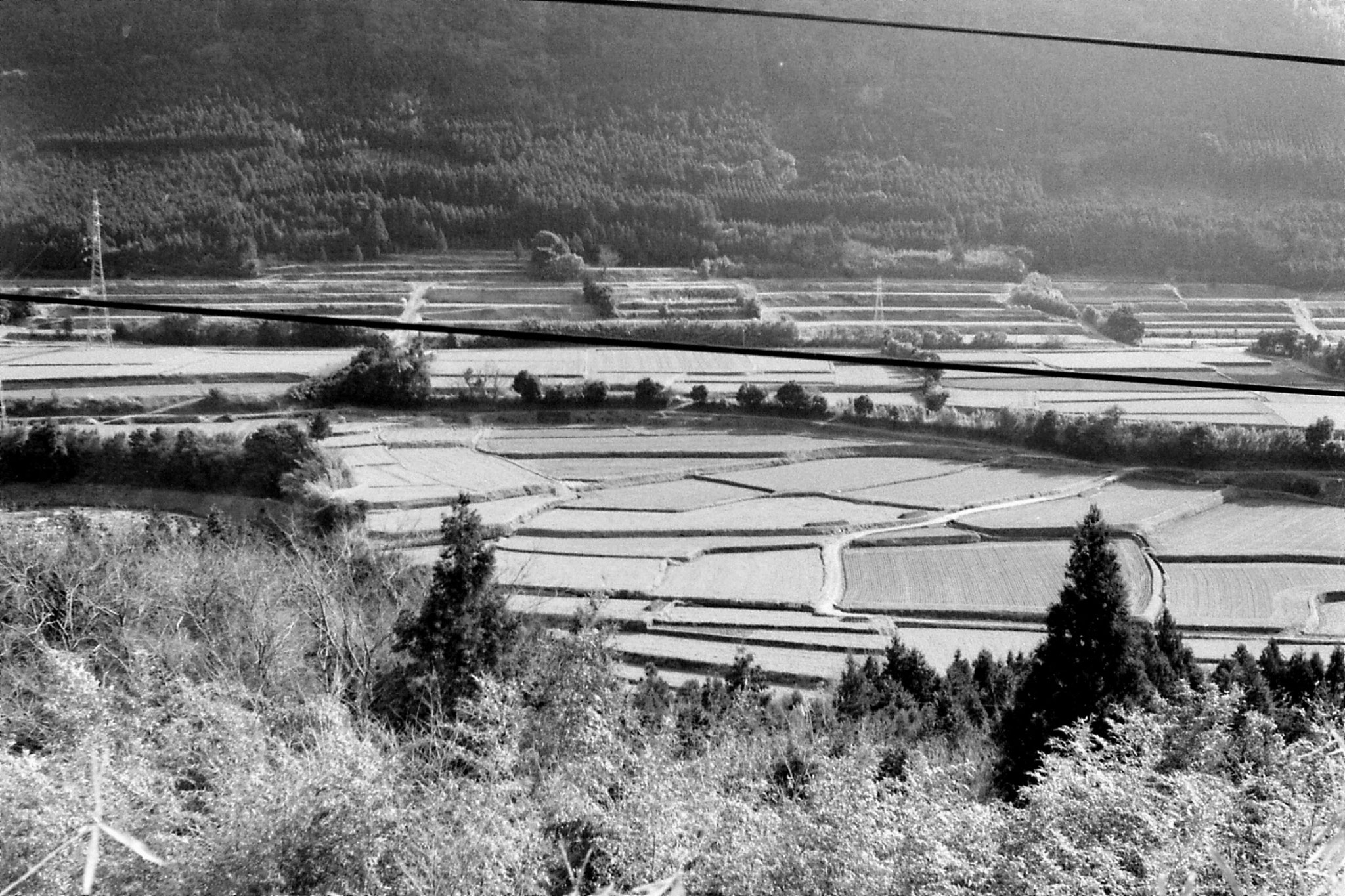 21/1/1989: 7: paddy fields in valley at Tateno (en route  Kumamoto to Aso)