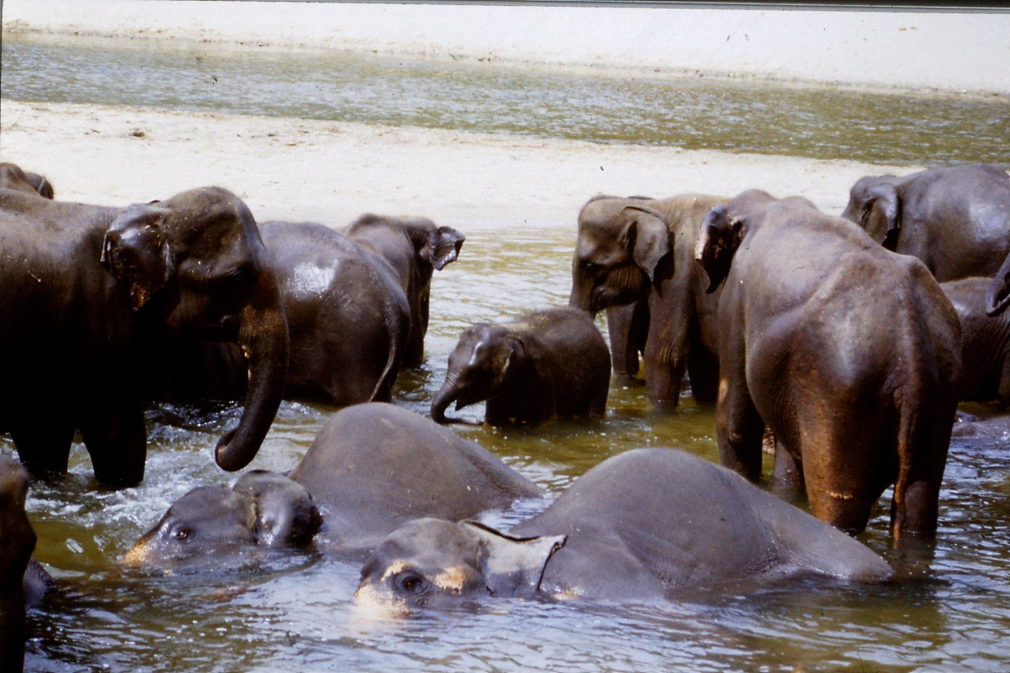 103/13: 10/2/1990 Kegalla elephany orphanage