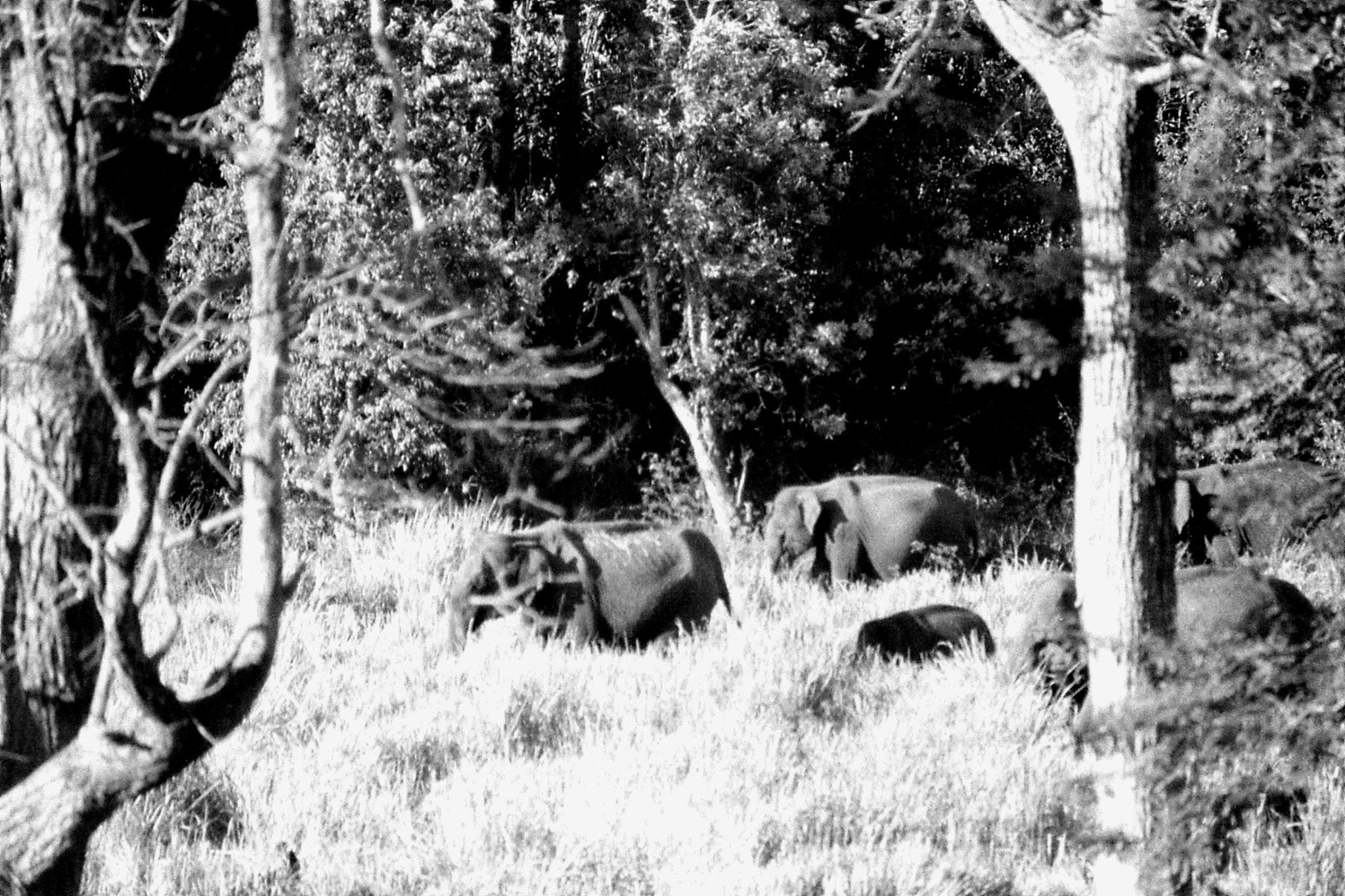 9/3/1990: 19: Nagarahole