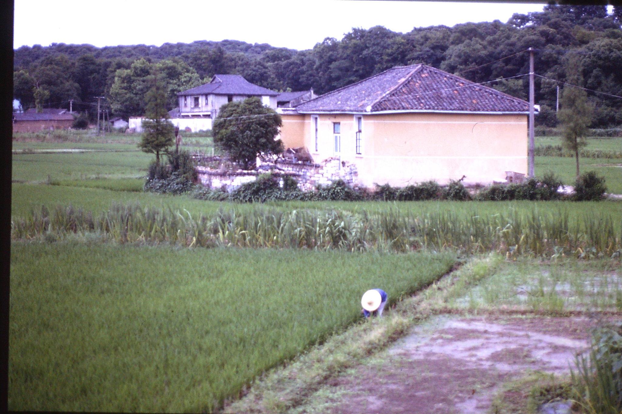 8/6/1989: 13: Hangzhou, near Zhejiang Guest House