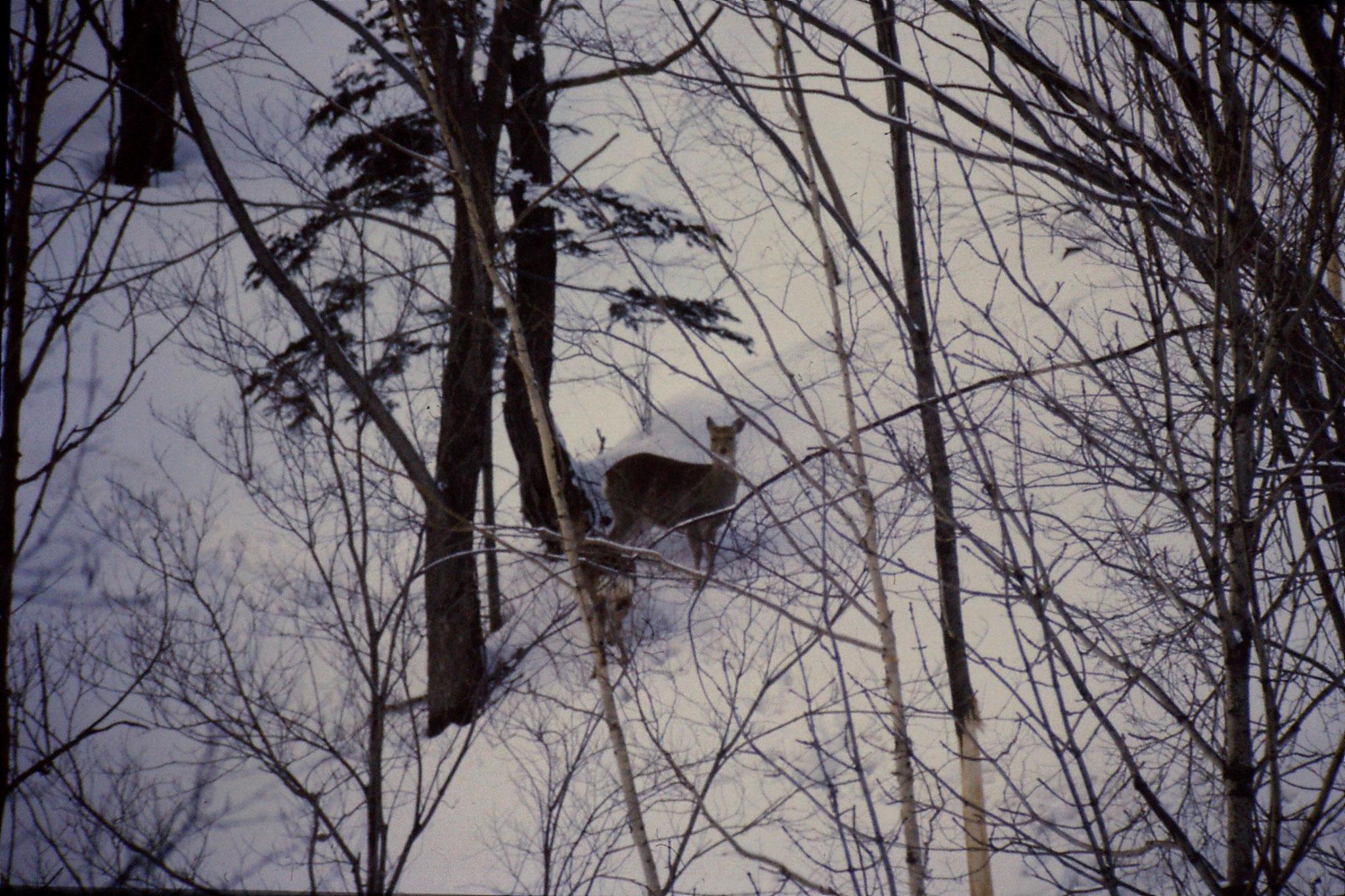 12/1/1989: 21: Sounkyo Onsen Gorge
