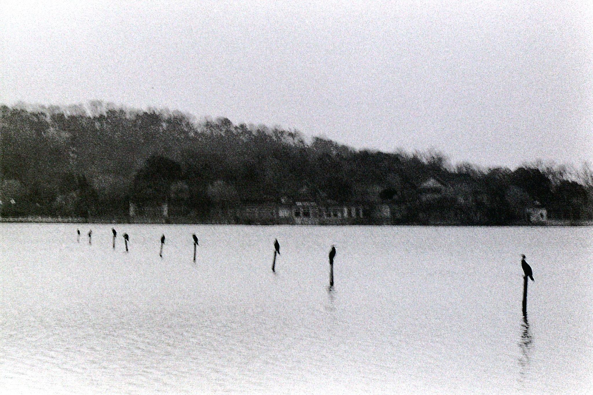 26/3/1989: 2: Hangzhou Huagang Park comorants