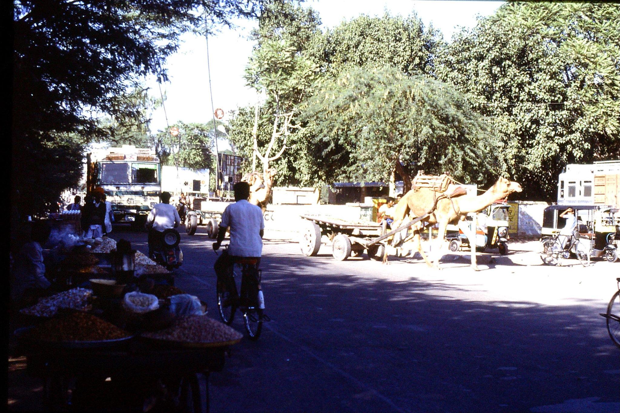 28/11/1989: 28: Jodhpur camel carts