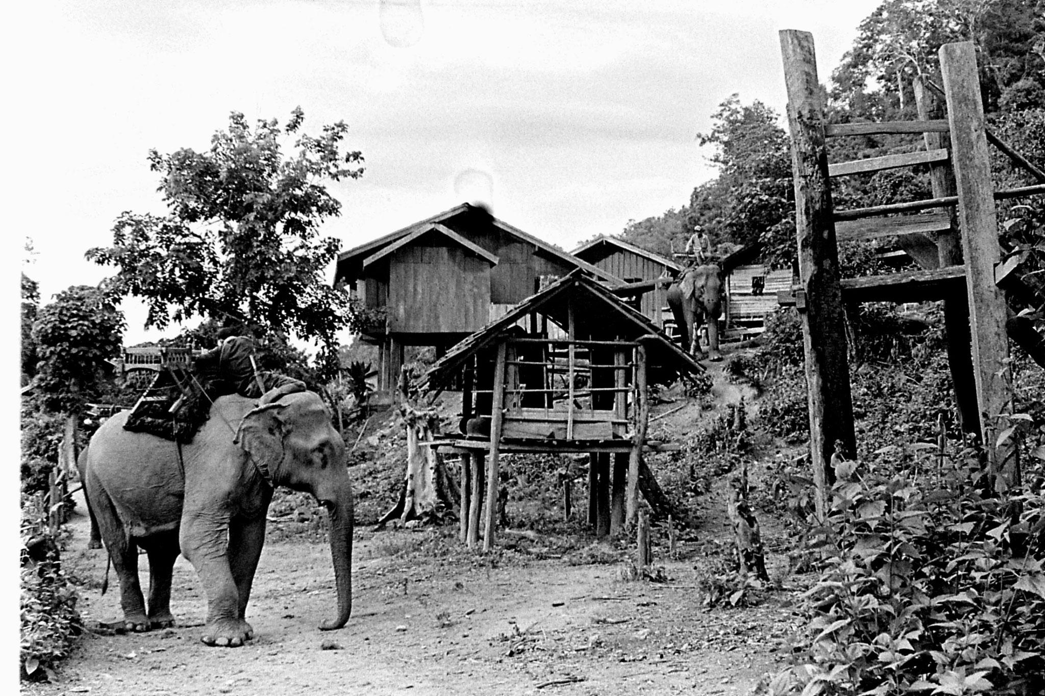 13/6/1990: 23: Last day of Trek, on elephant