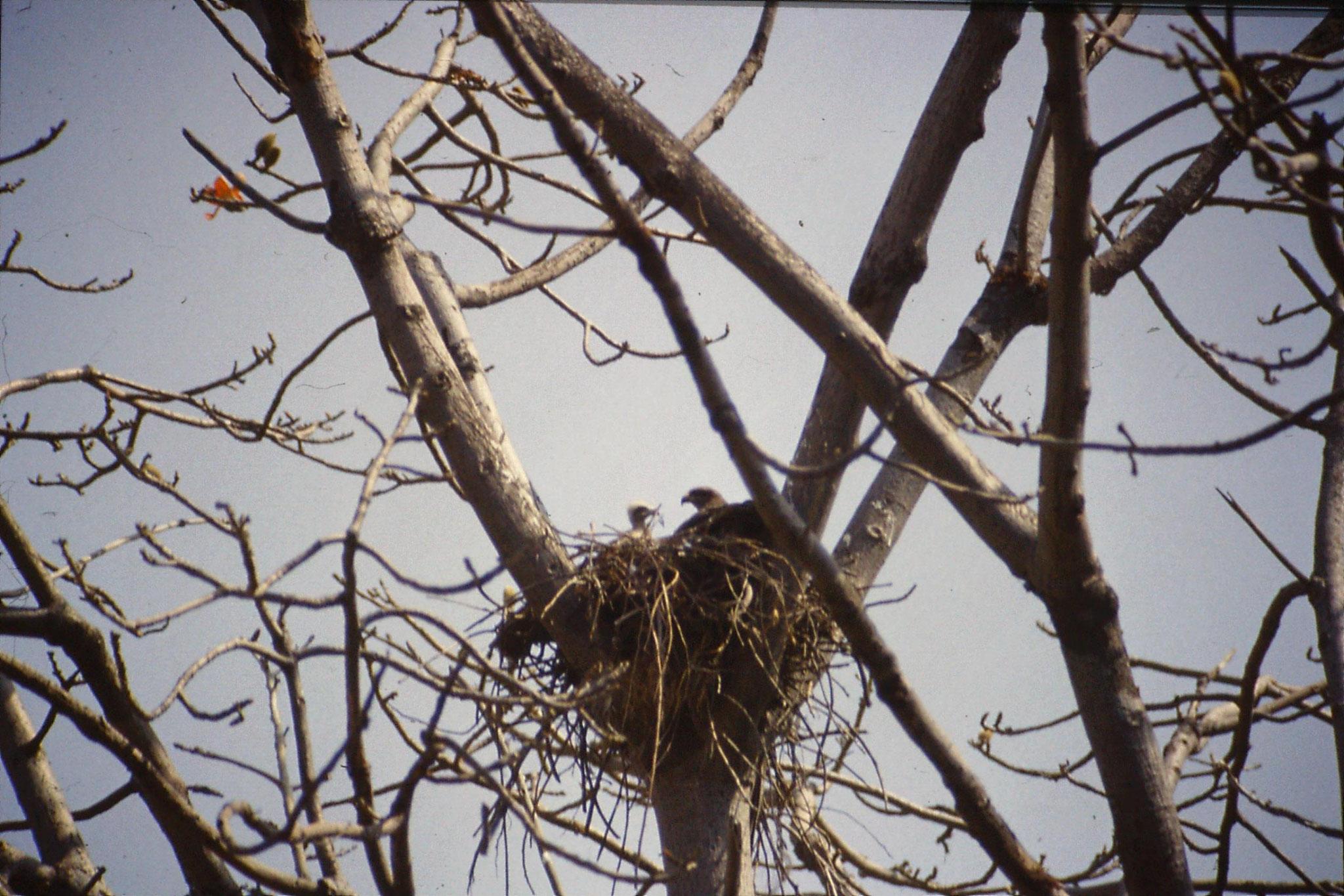 108/36: 25/3/1990 Delhi - kite's nest