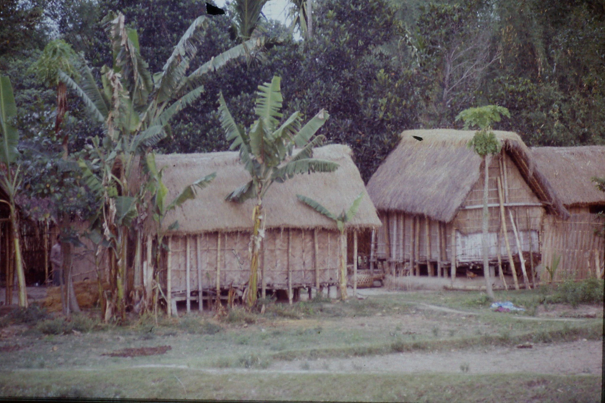109/24: 7/4 West Bengal near border with Assam - huts on stilts