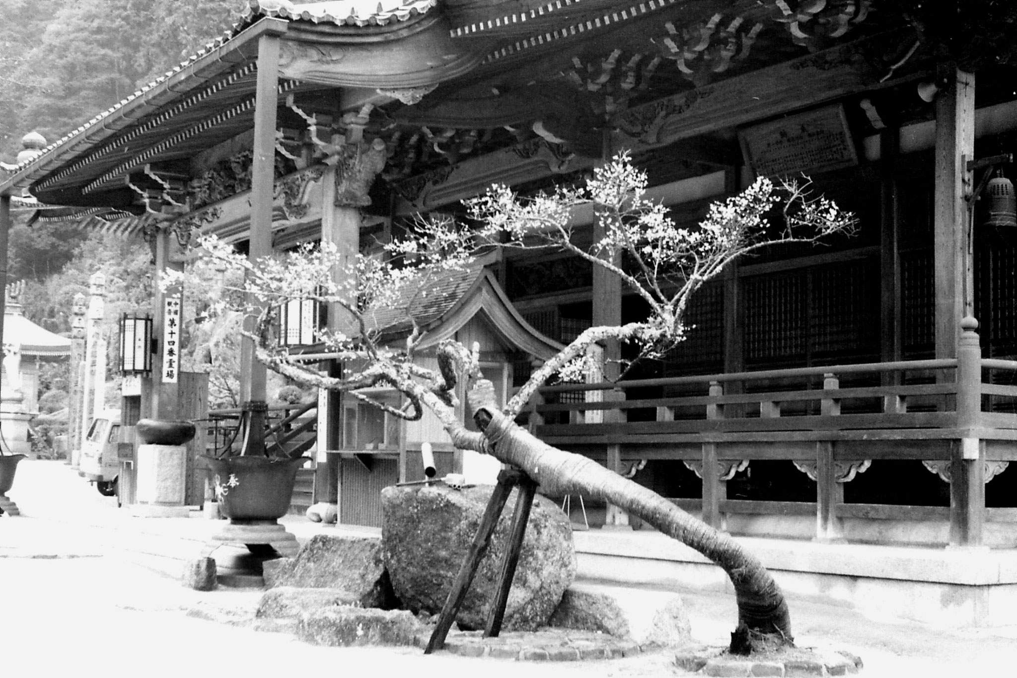 23/1/1989: 7: Miyajima: Dashoin Temple