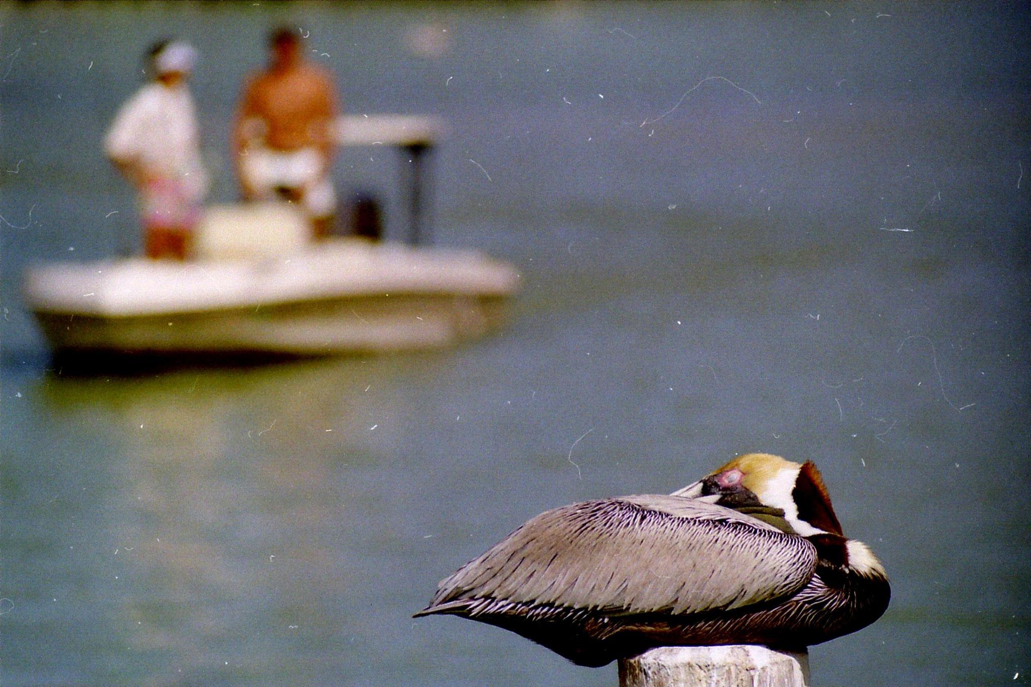 Florida 1991
