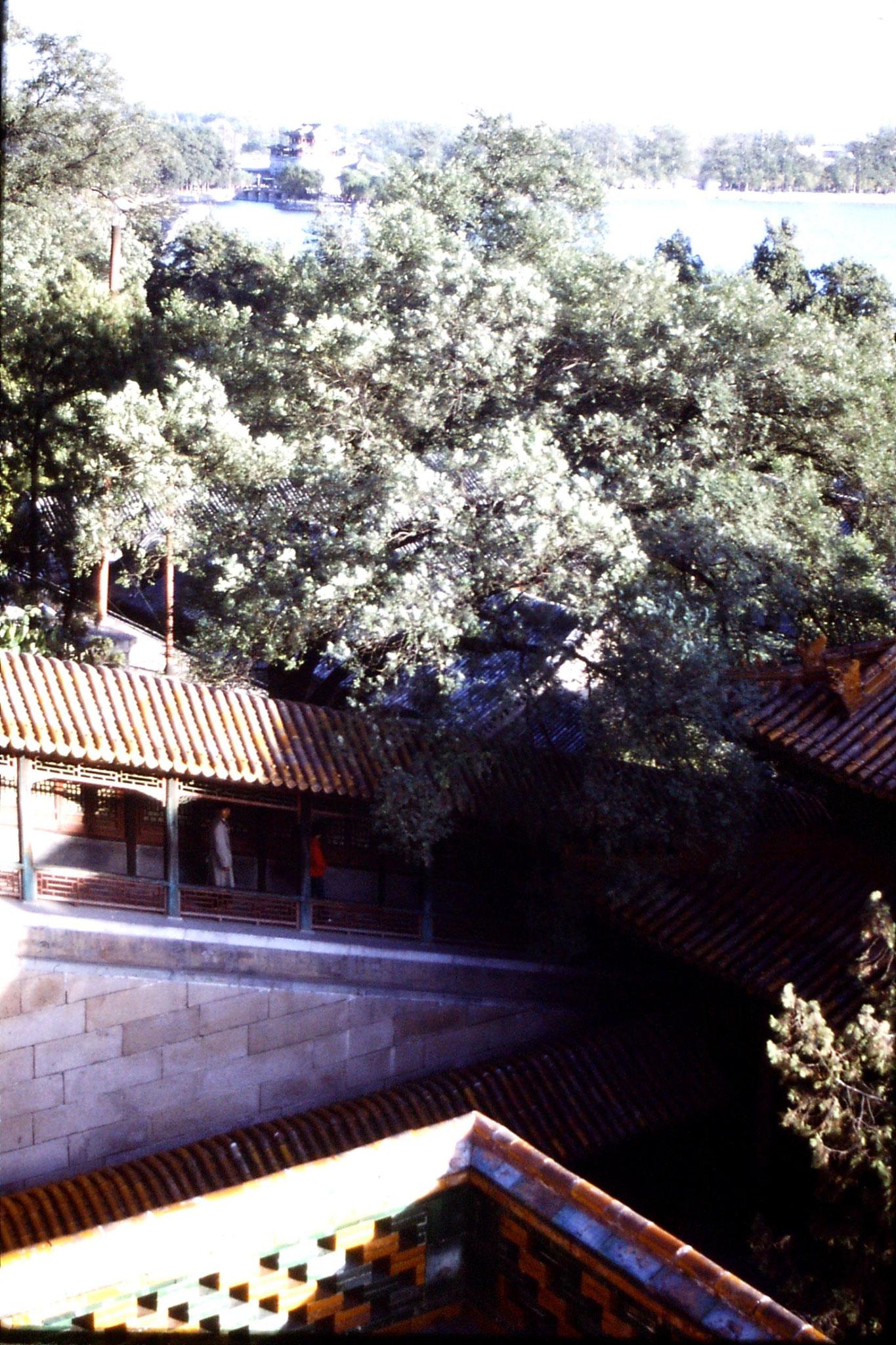 1/11/1988: 12: Summer Palace