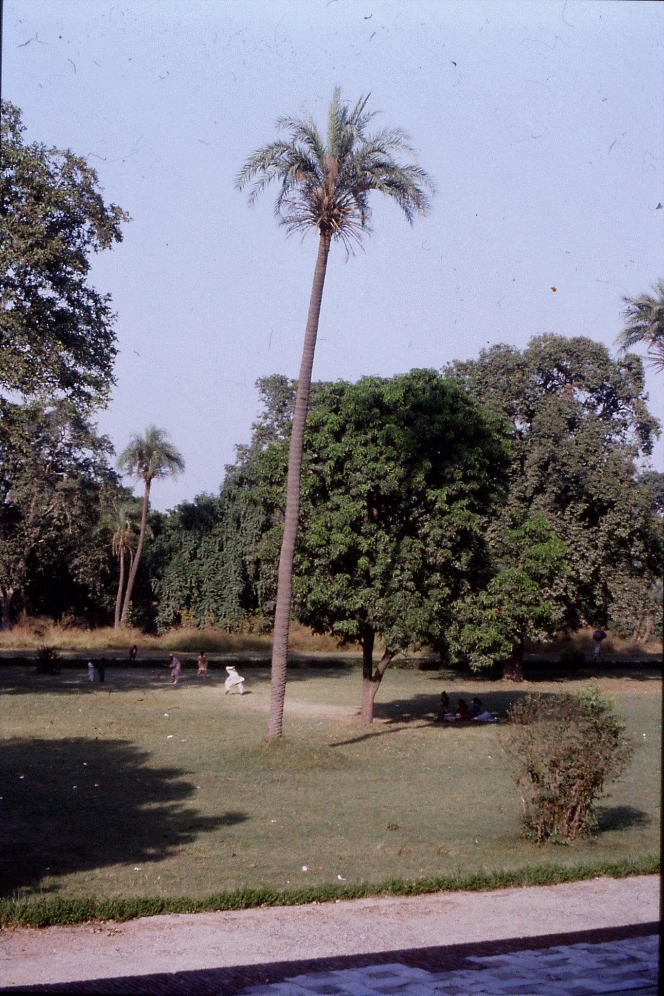 10/11/1989: Lahore, Jehangir's tomb cricket