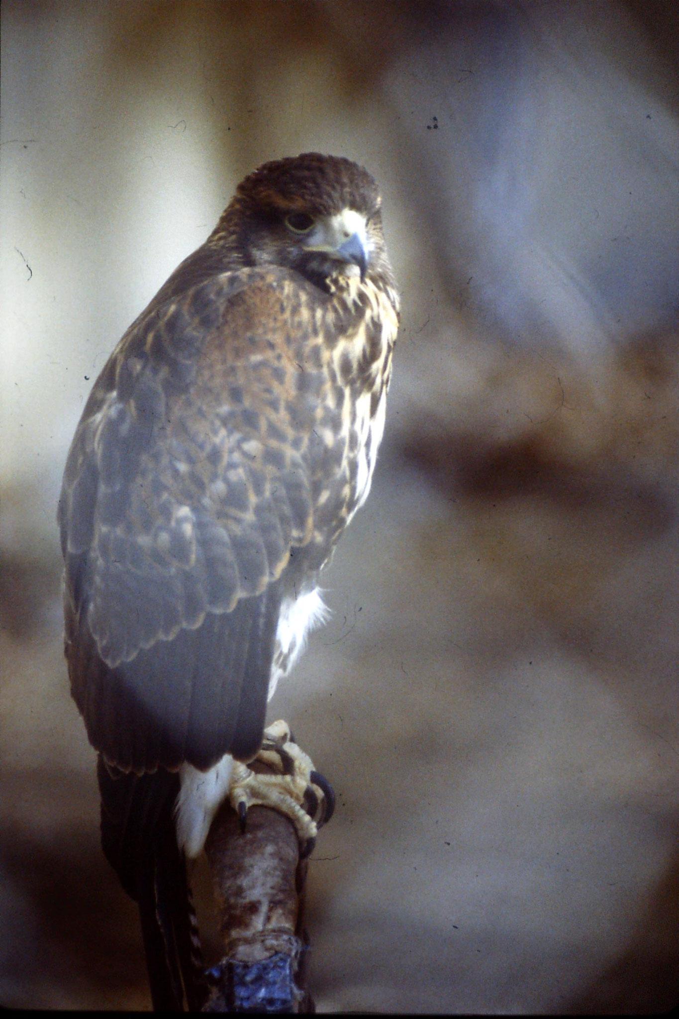 29/1/1991: 9: Boise Zoo