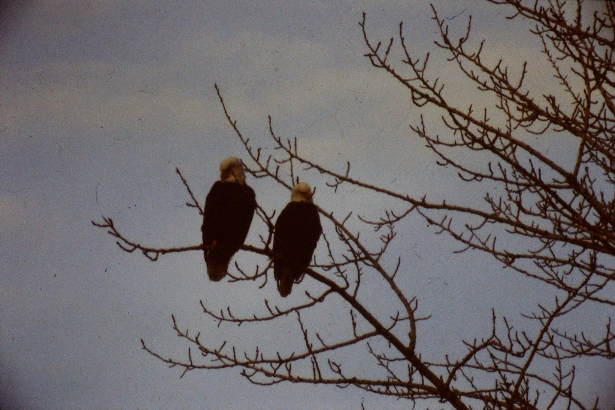 3/2/1991: 11: Boise