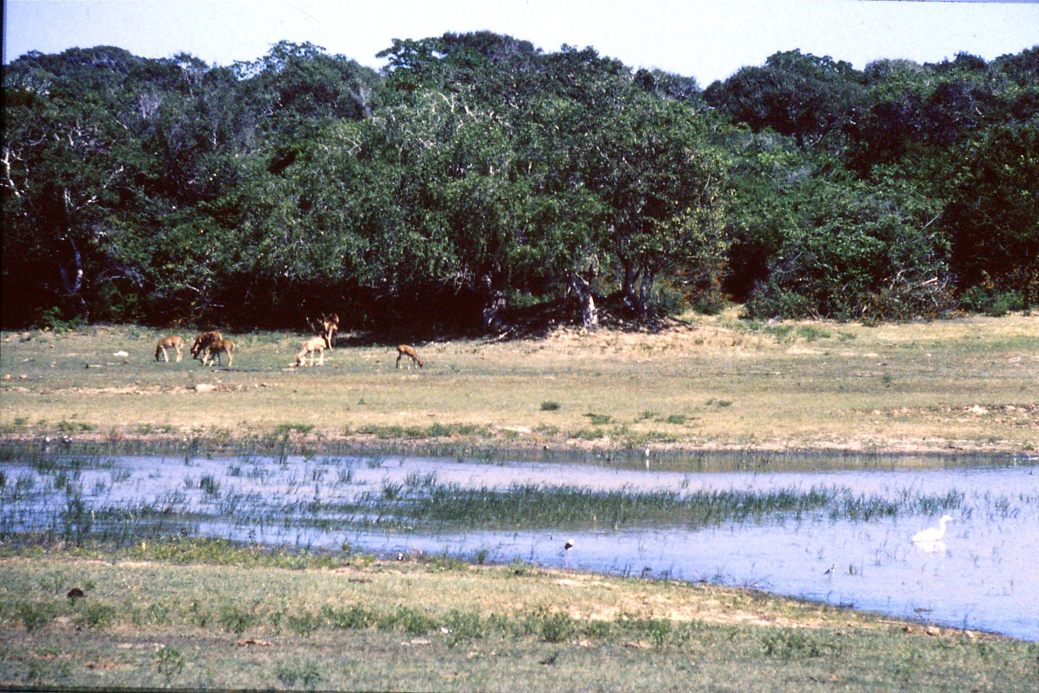 27/1/1989: 23: Yala National Park
