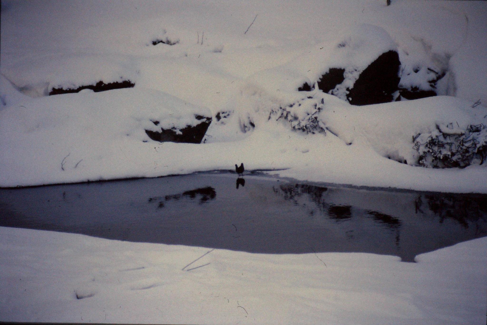 12/1/1989: 19: Sounkyo Onsen Gorge