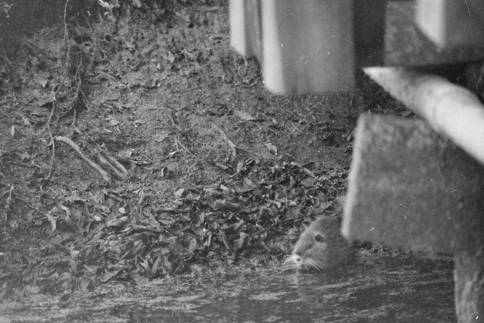 13/1/1991: 2: St Bernard Louisiana State Park