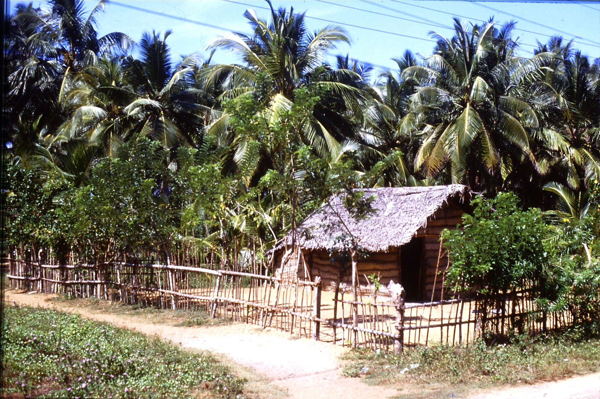 24/1/1990: 30: coconut branch house