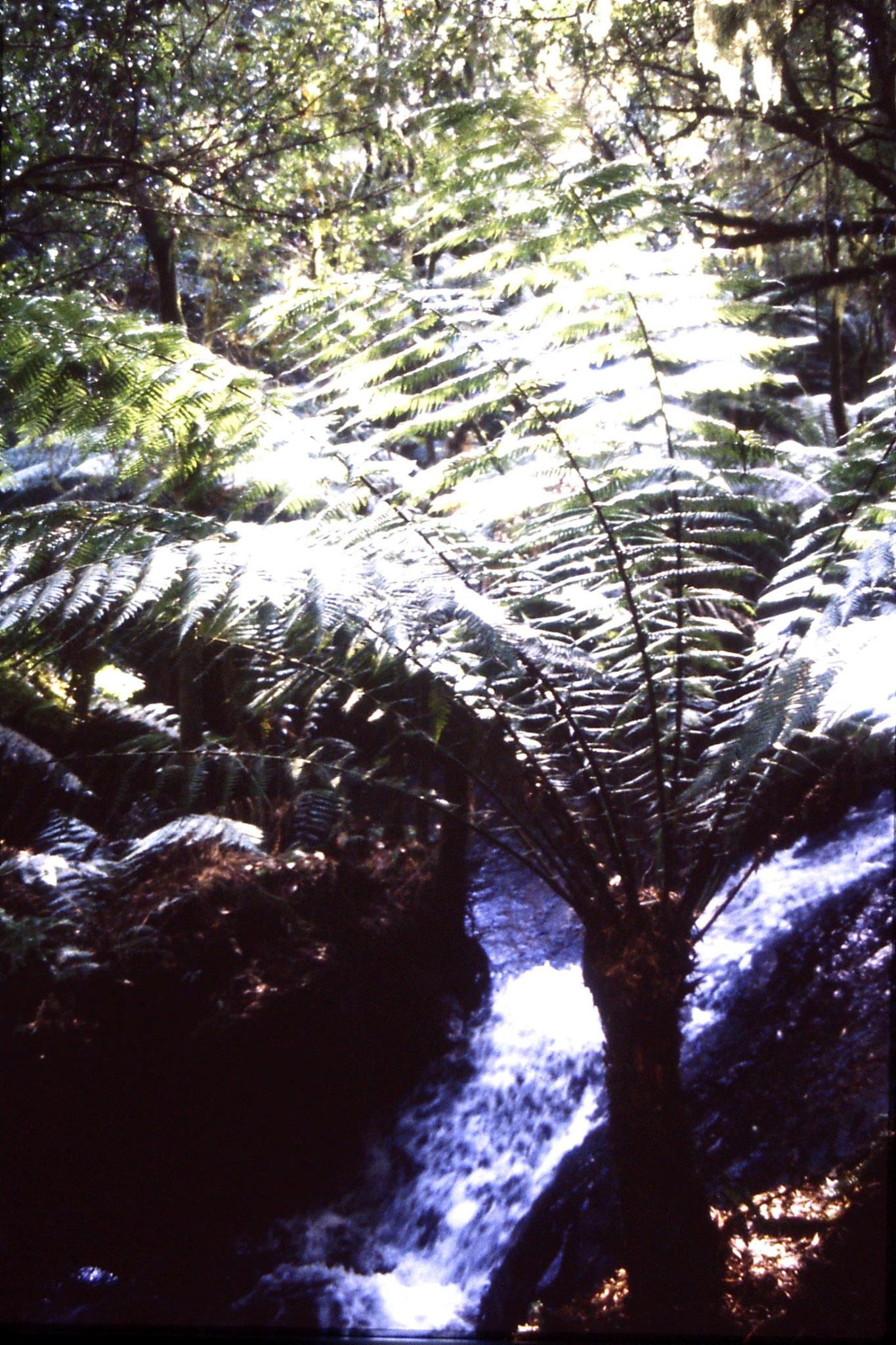 19/9/1990: 24: Anne's Cascade Melba Gully