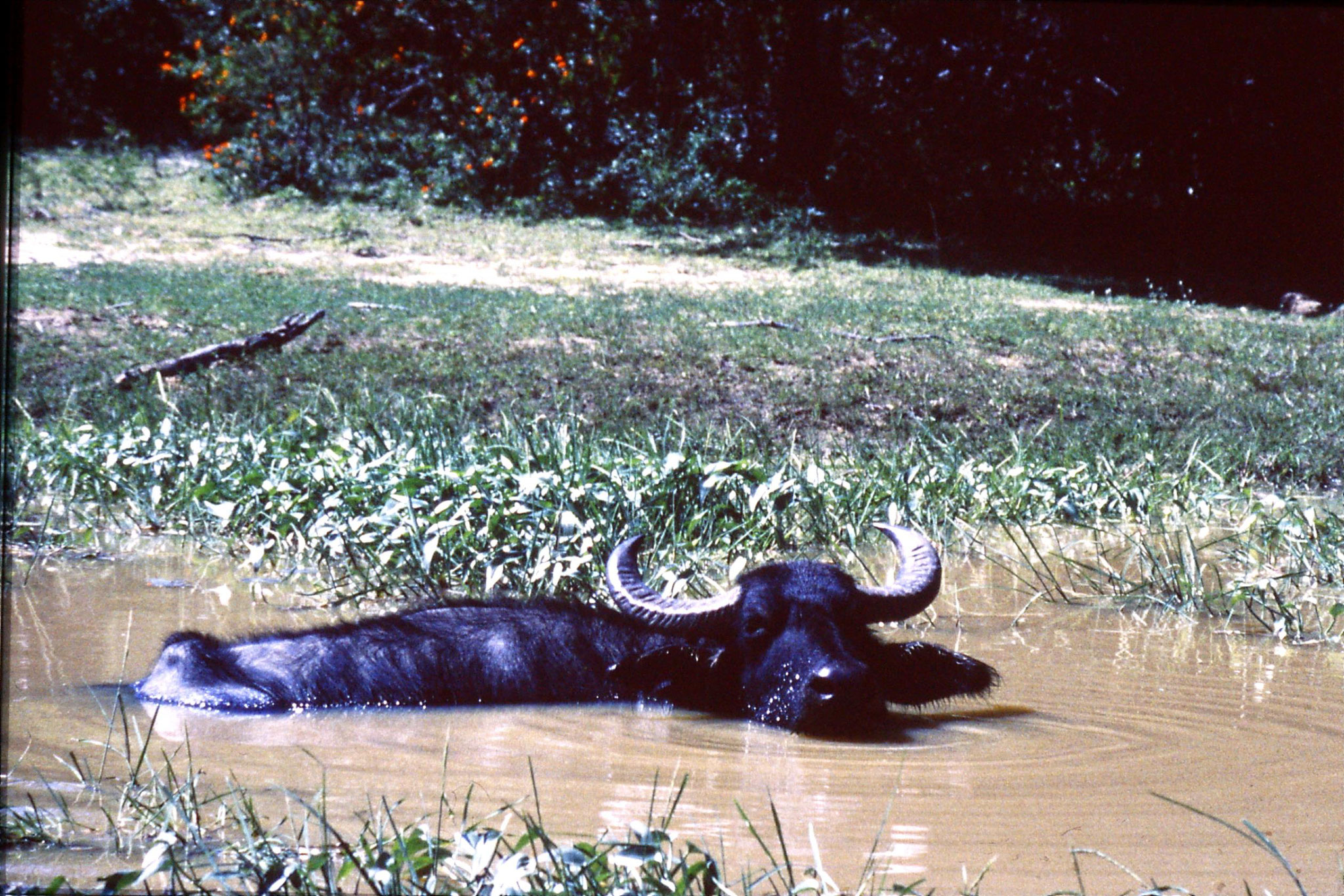 27/1/1989: 24: Yala National Park